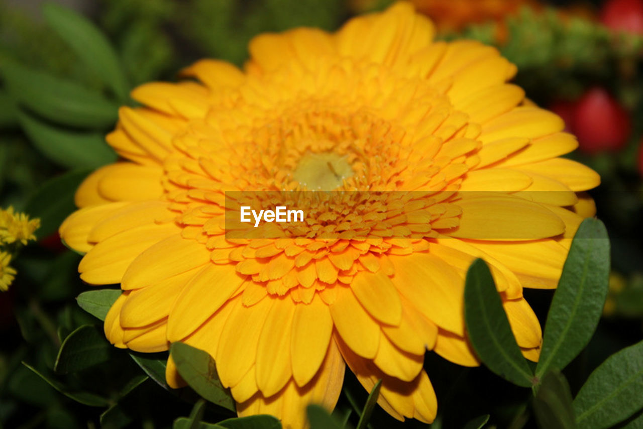 flower, petal, beauty in nature, fragility, flower head, yellow, freshness, nature, growth, pollen, no people, blooming, close-up, day, focus on foreground, outdoors, plant