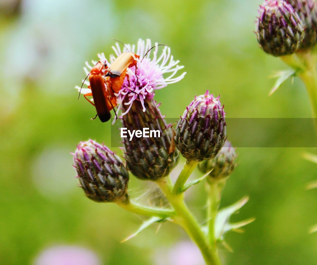 flowering plant, flower, plant, animal wildlife, fragility, invertebrate, insect, animals in the wild, animal, beauty in nature, vulnerability, close-up, animal themes, freshness, flower head, growth, petal, bee, pollination, one animal, no people, outdoors