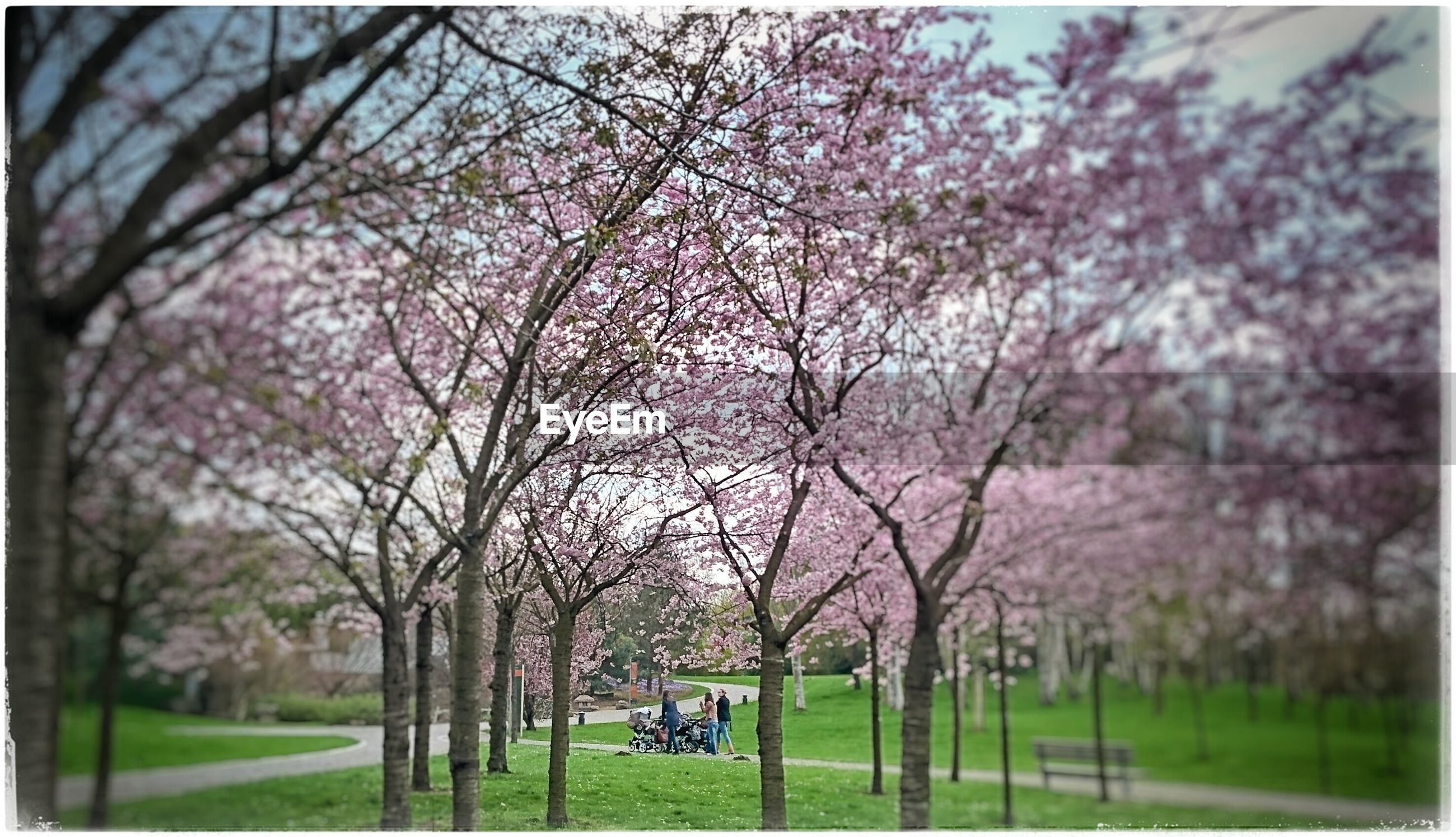 tree, grass, park - man made space, leisure activity, transfer print, lifestyles, auto post production filter, branch, men, person, park, nature, flower, growth, day, field, bicycle, outdoors, beauty in nature