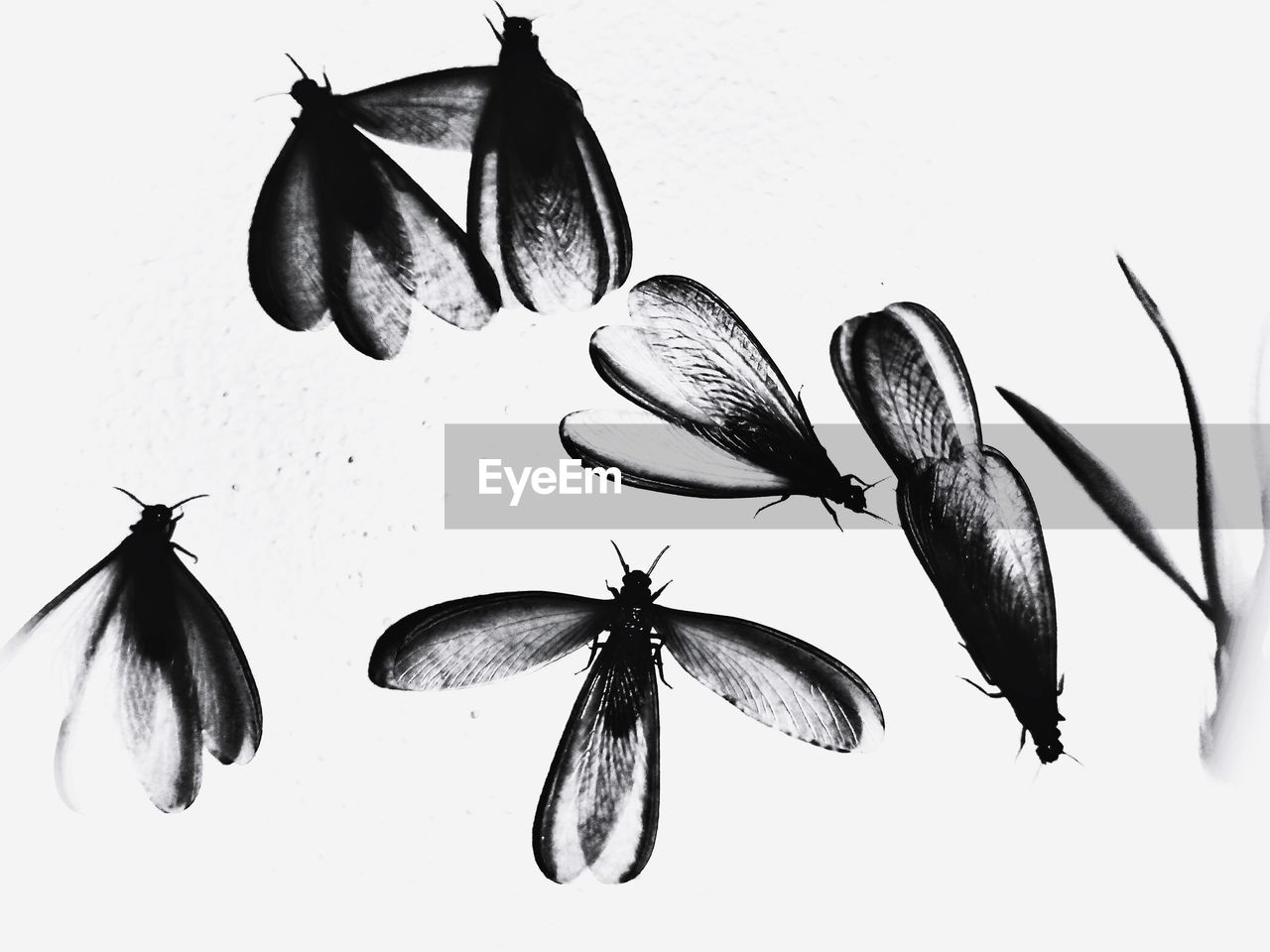 studio shot, close-up, indoors, no people, animal, white background, food, freshness, nature, group of animals, animal themes, flower, food and drink, still life, fragility, plant, flowering plant, animal wildlife, beauty in nature, vulnerability, flower head, marine