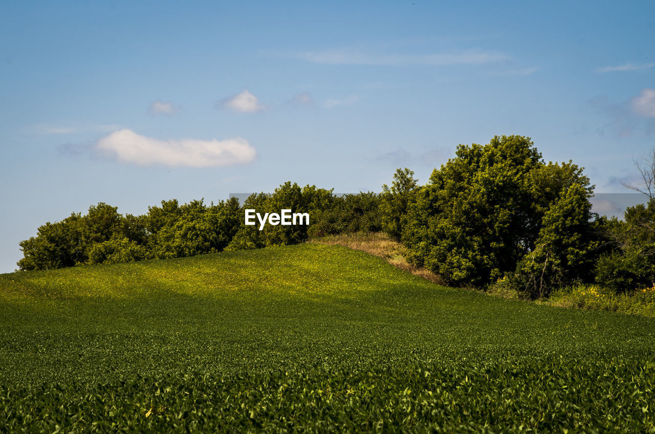 plant, tree, green color, grass, sky, beauty in nature, tranquil scene, growth, tranquility, land, scenics - nature, environment, landscape, field, nature, non-urban scene, no people, day, cloud - sky, idyllic, outdoors