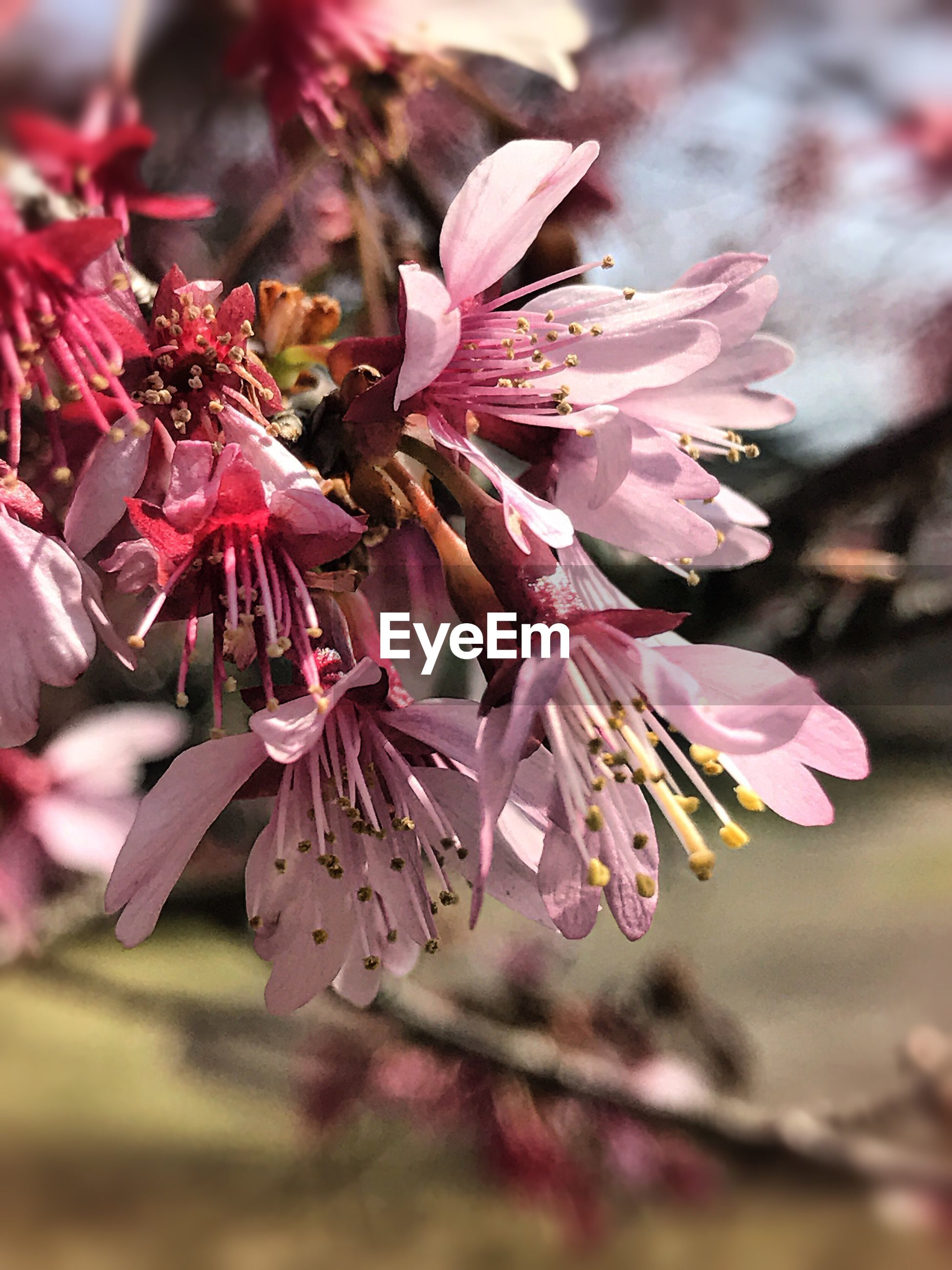 flower, nature, beauty in nature, fragility, freshness, growth, close-up, petal, flower head, no people, day, plant, springtime, outdoors, branch, tree, rhododendron