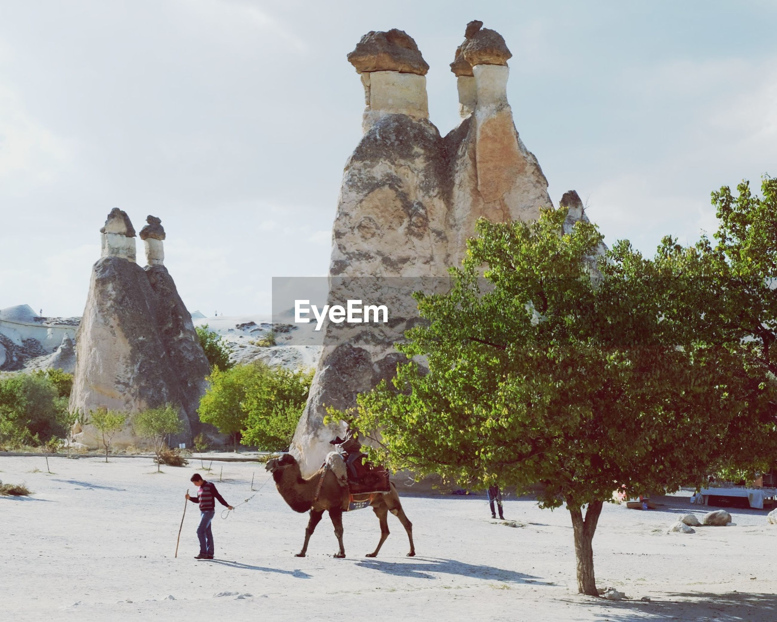 TOURISTS ON TREE
