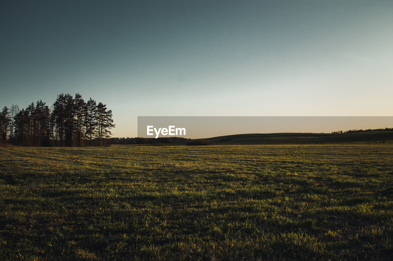 sky, plant, landscape, environment, tranquil scene, tranquility, field, beauty in nature, land, scenics - nature, tree, grass, nature, clear sky, growth, no people, non-urban scene, green color, rural scene, copy space, outdoors