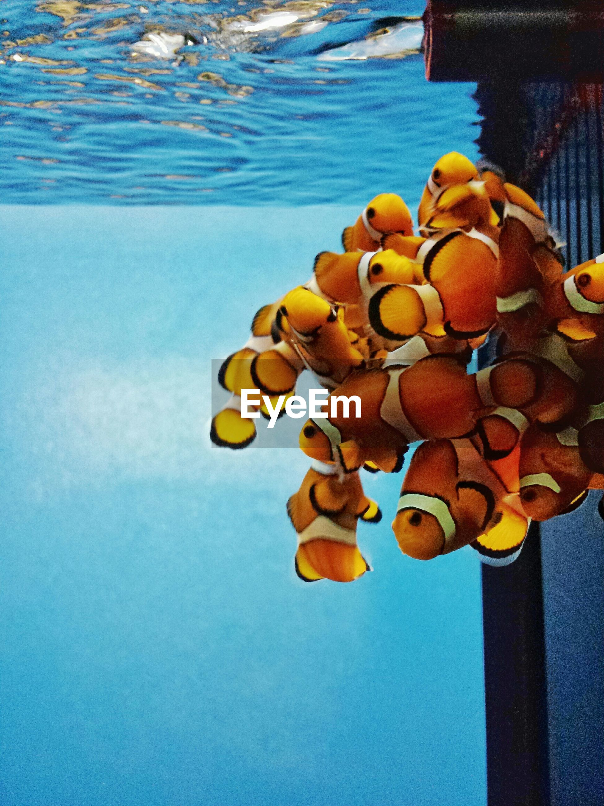 water, large group of objects, wood - material, no people, multi colored, blue, high angle view, sea, outdoors, sunlight, day, abundance, nature, stack, still life, tranquility, orange color, close-up, protection, reflection