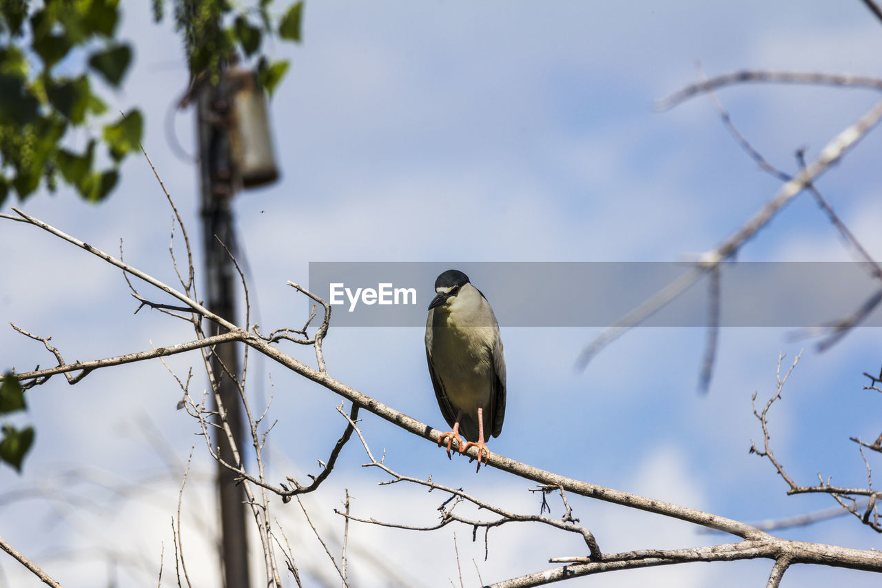 Bird Perching On Branch