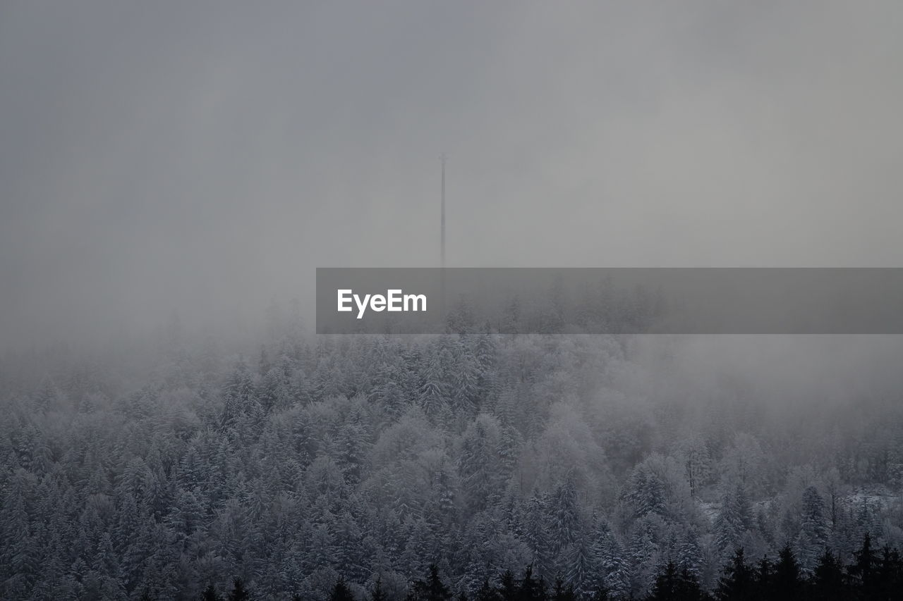 tree, fog, plant, beauty in nature, tranquil scene, tranquility, no people, scenics - nature, cold temperature, environment, nature, land, non-urban scene, sky, winter, forest, landscape, idyllic, day, hazy