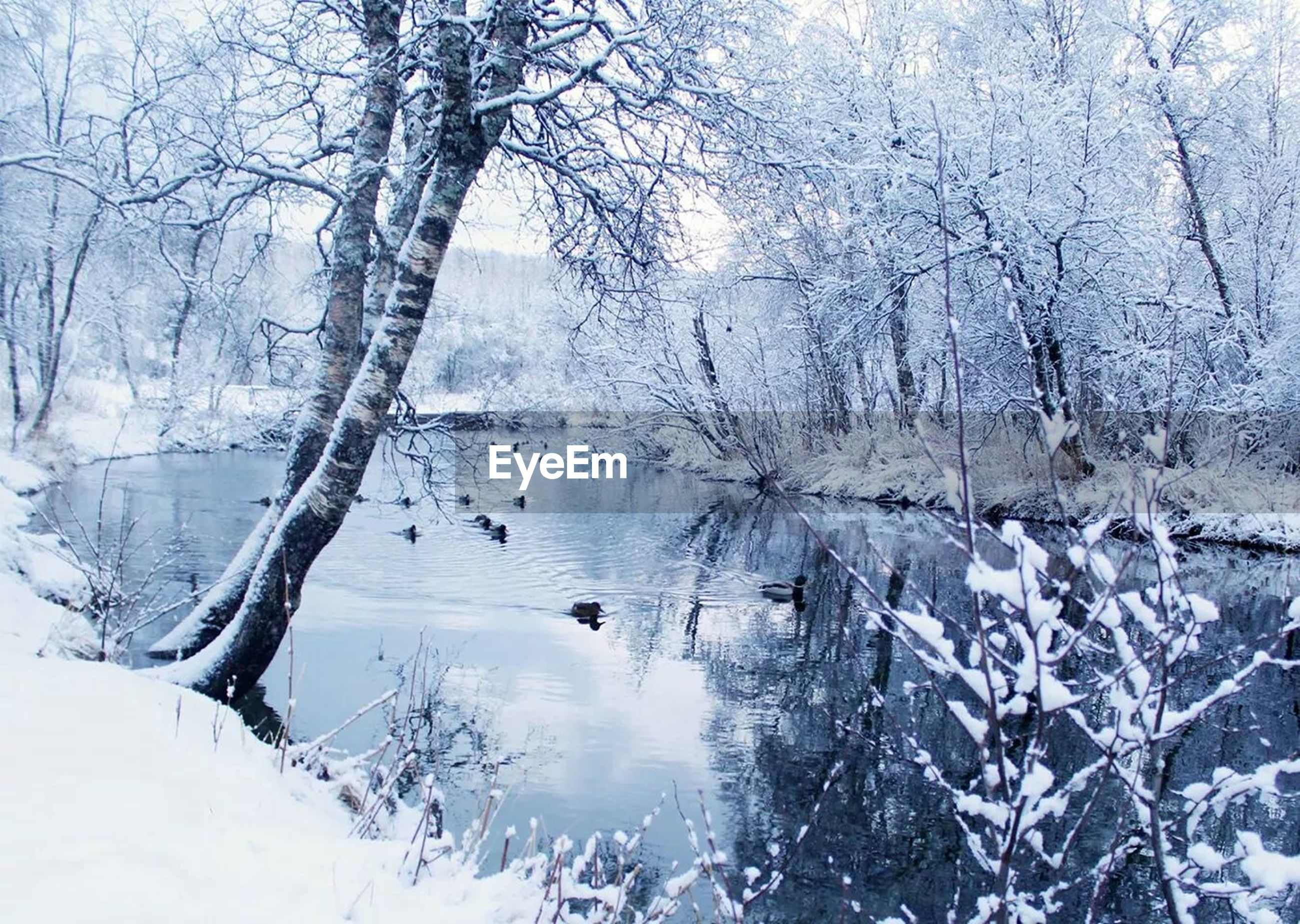 River amidst snow covered forest