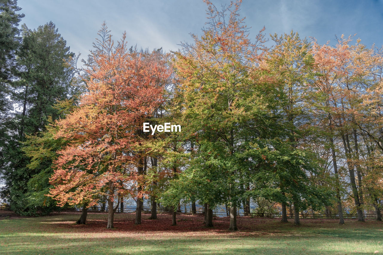 tree, plant, autumn, beauty in nature, growth, nature, tranquility, day, change, sky, park, tranquil scene, land, no people, outdoors, scenics - nature, orange color, grass, park - man made space, idyllic, fall, treelined