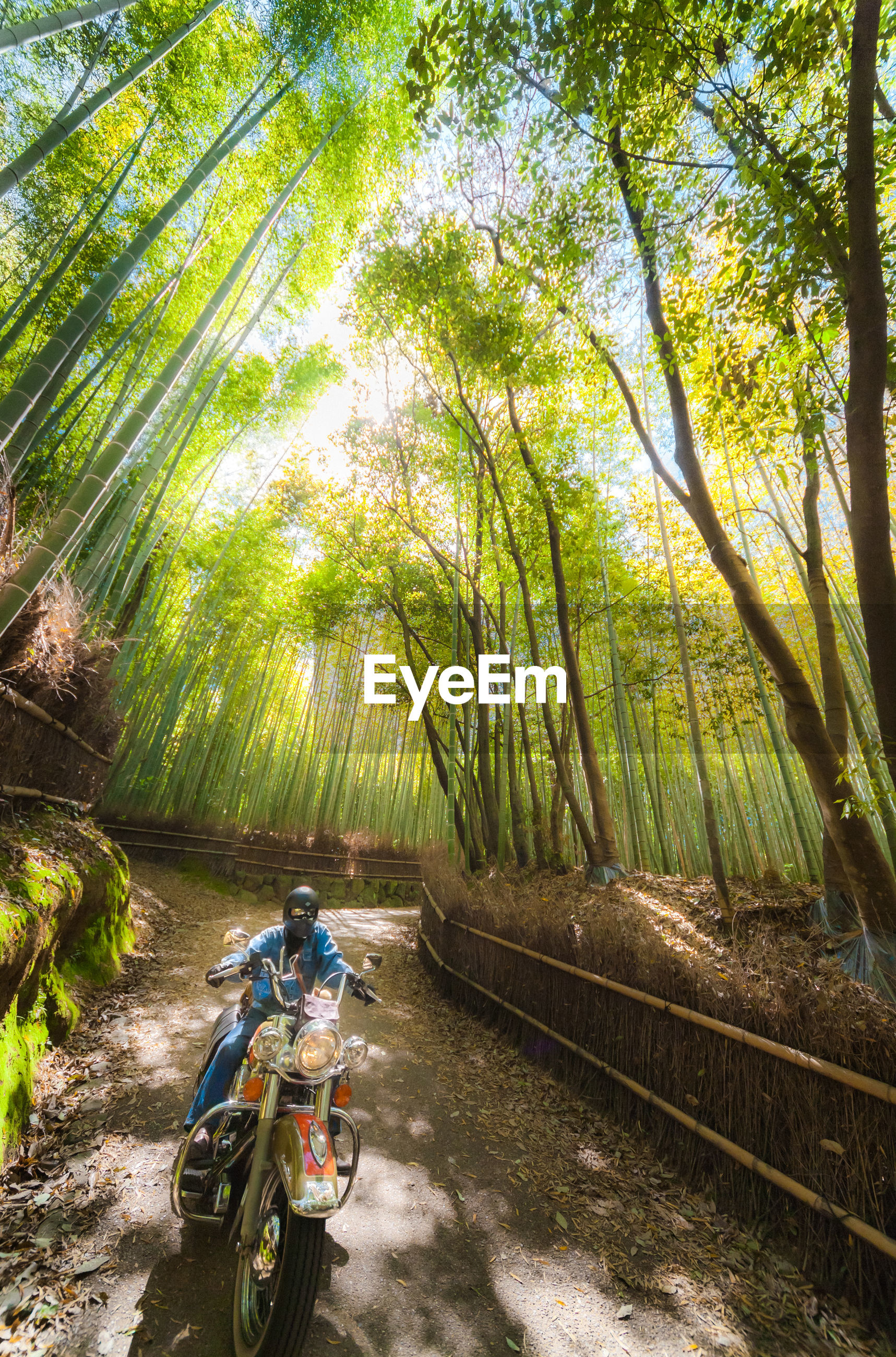transportation, tree, mode of transport, bicycle, land vehicle, lifestyles, men, leisure activity, riding, travel, nature, growth, sunlight, tranquility, car, on the move, motorcycle