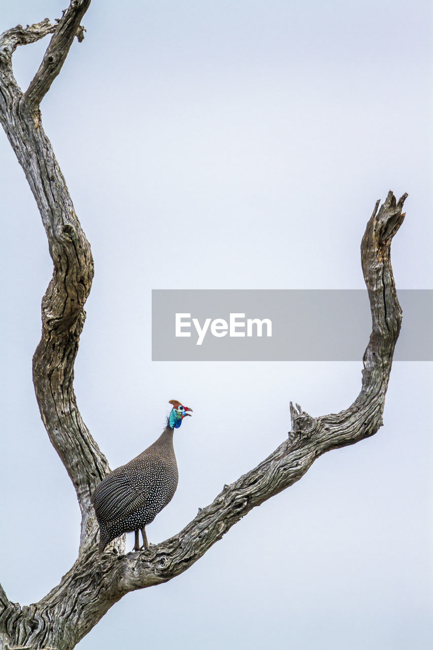 LOW ANGLE VIEW OF A BIRD PERCHING ON TREE AGAINST SKY
