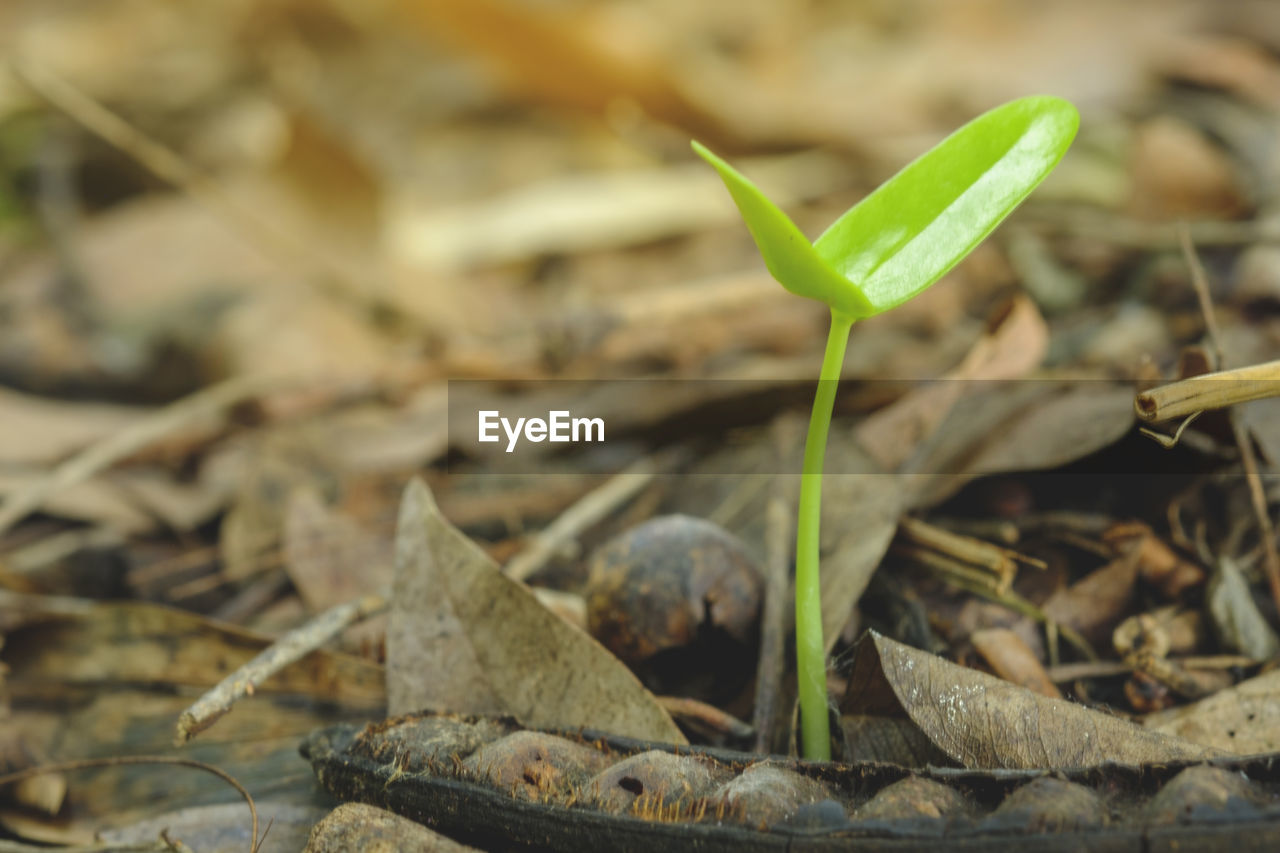 close-up, green color, plant part, leaf, no people, selective focus, nature, day, growth, focus on foreground, plant, outdoors, field, land, seedling, beginnings, beauty in nature, food, invertebrate, vulnerability