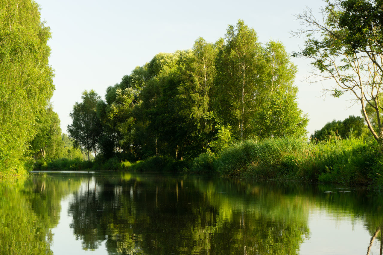 tree, lake, reflection, plant, water, tranquility, beauty in nature, green color, tranquil scene, growth, nature, sky, no people, scenics - nature, non-urban scene, waterfront, day, clear sky, idyllic, outdoors
