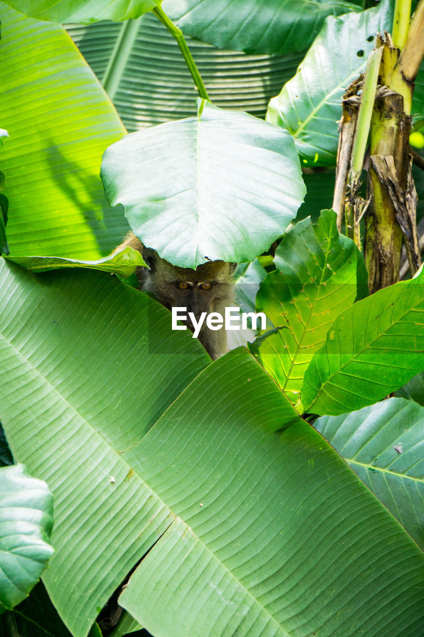 leaf, animal themes, nature, one animal, growth, green color, day, animals in the wild, no people, plant, outdoors, banana tree, beauty in nature, banana leaf, close-up, bird