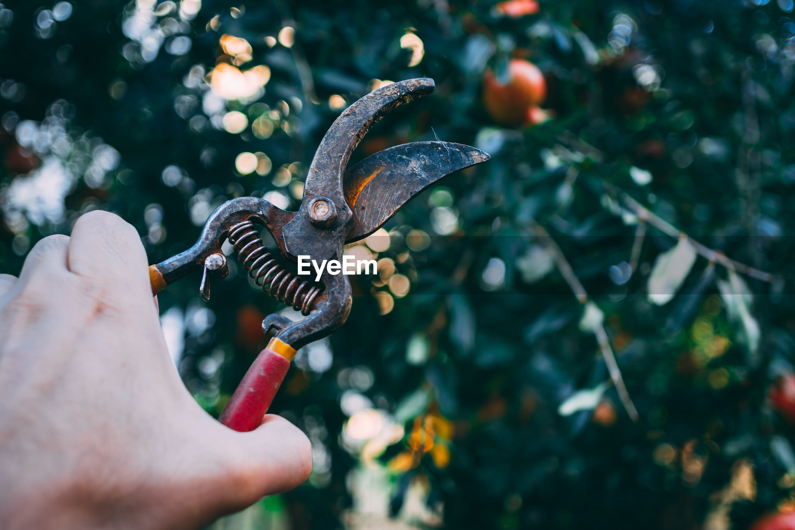 Hand holding pruning shears with tree in the background.