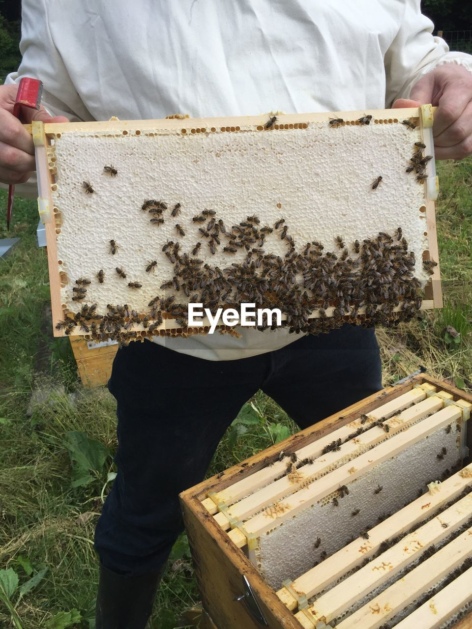 Midsection Of Man Holding Beehive On Field At Park