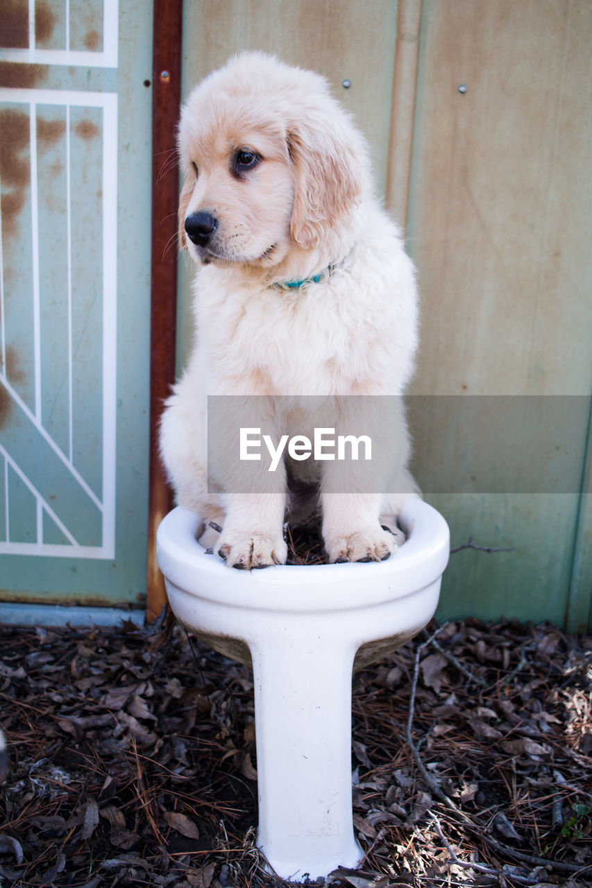 Close-up of puppy sitting on toilet bowl outdoors