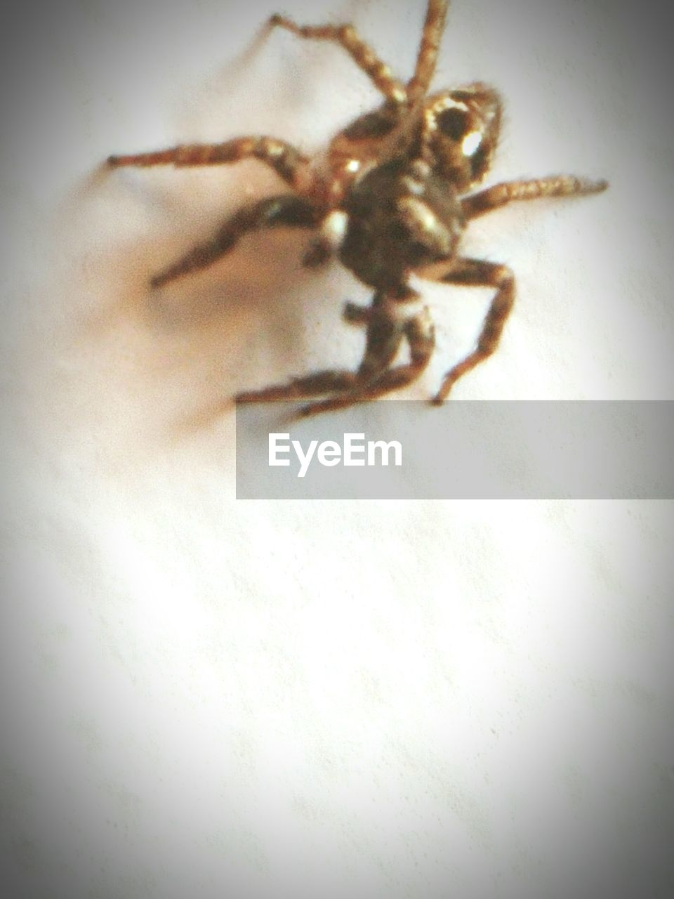 one animal, animal themes, spider, animals in the wild, no people, close-up, indoors, day