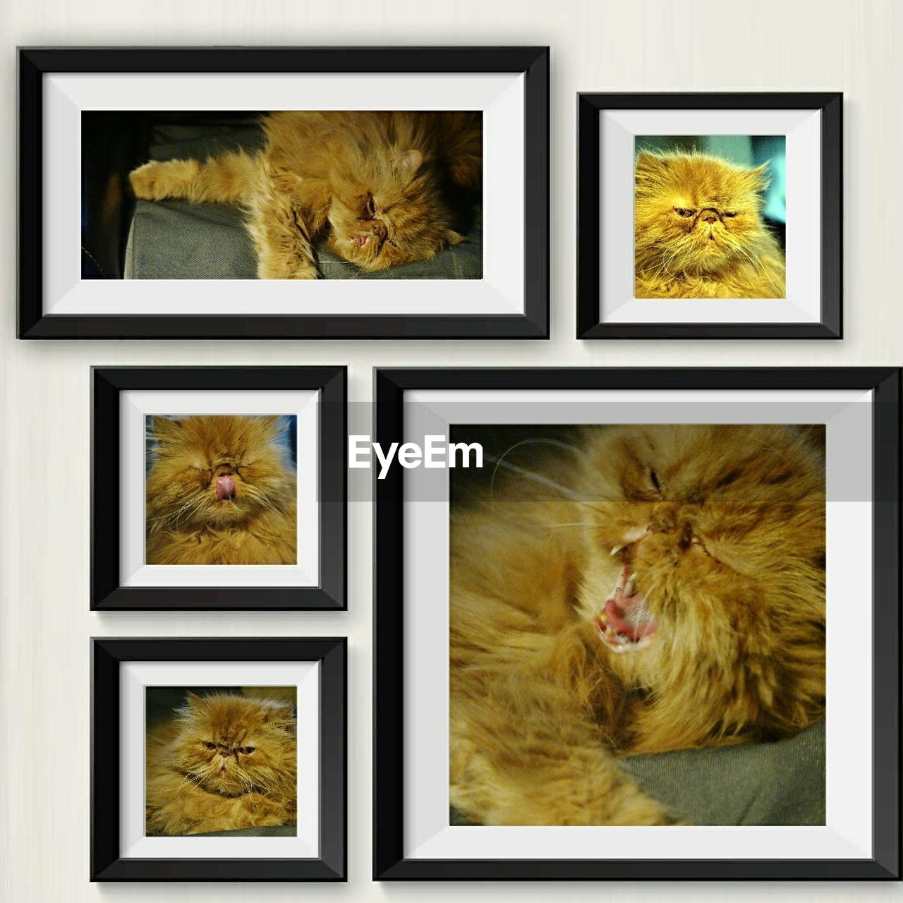 Picture Frames Of Cat On White Wall At Home
