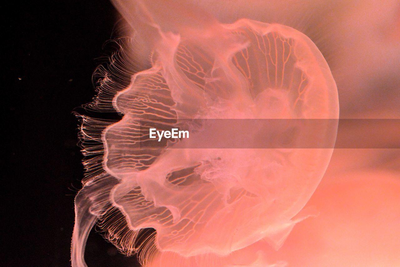 Close-Up Of Jellyfish In Aquarium