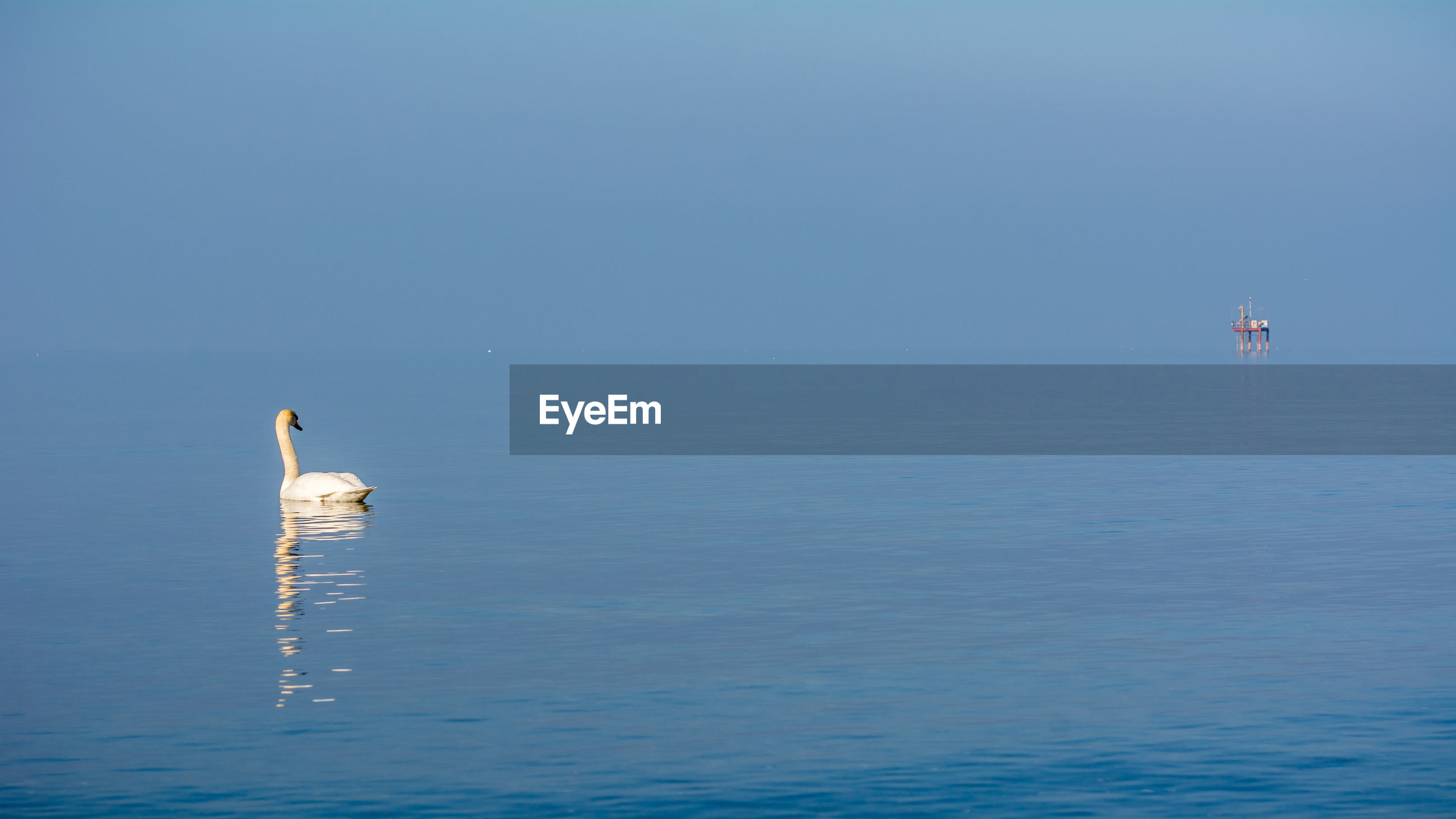 Swan on sea against clear blue sky