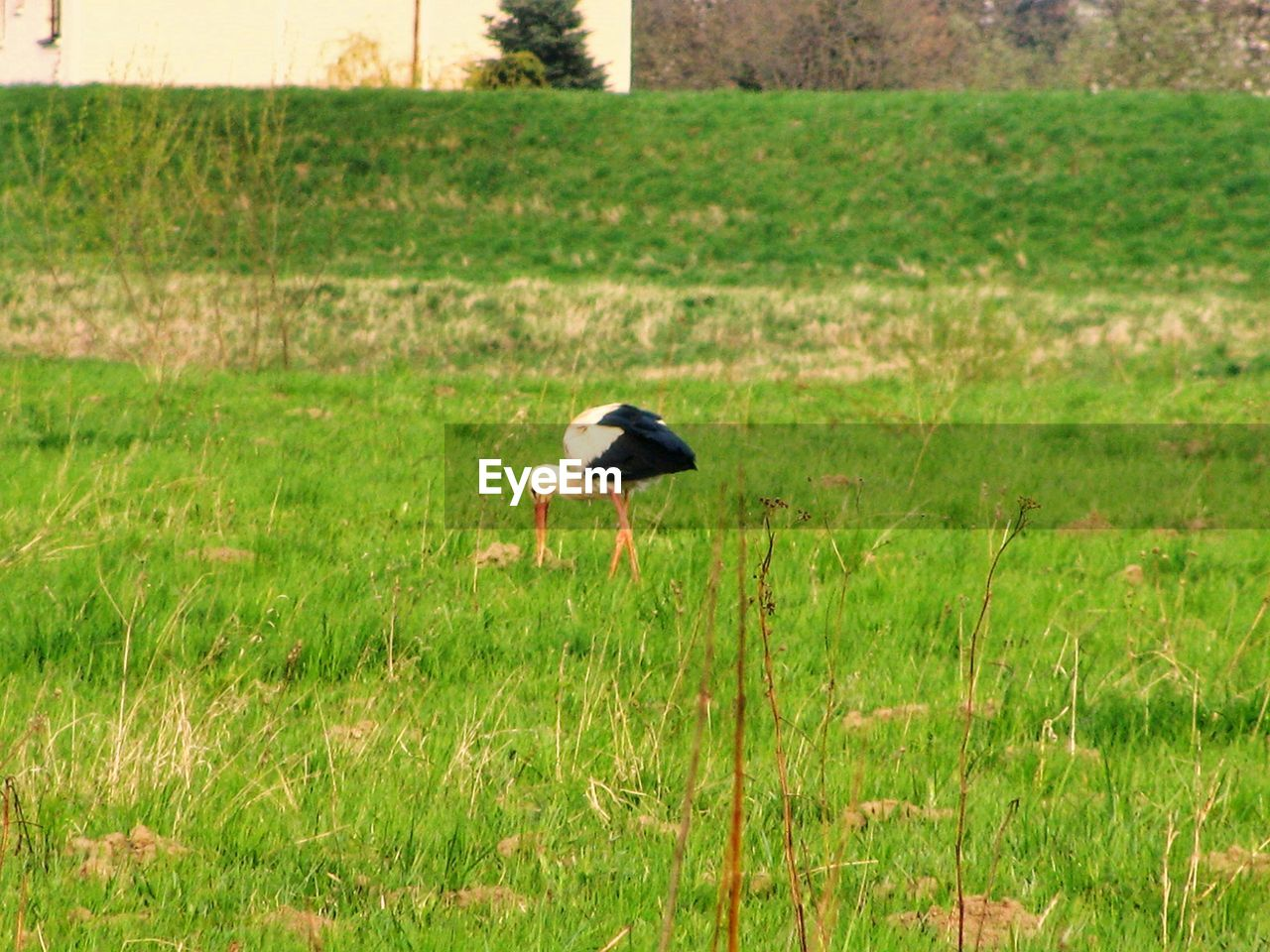 one animal, animal, bird, animal themes, vertebrate, animal wildlife, animals in the wild, grass, plant, field, land, green color, day, no people, nature, outdoors, side view, motion, growth, flying