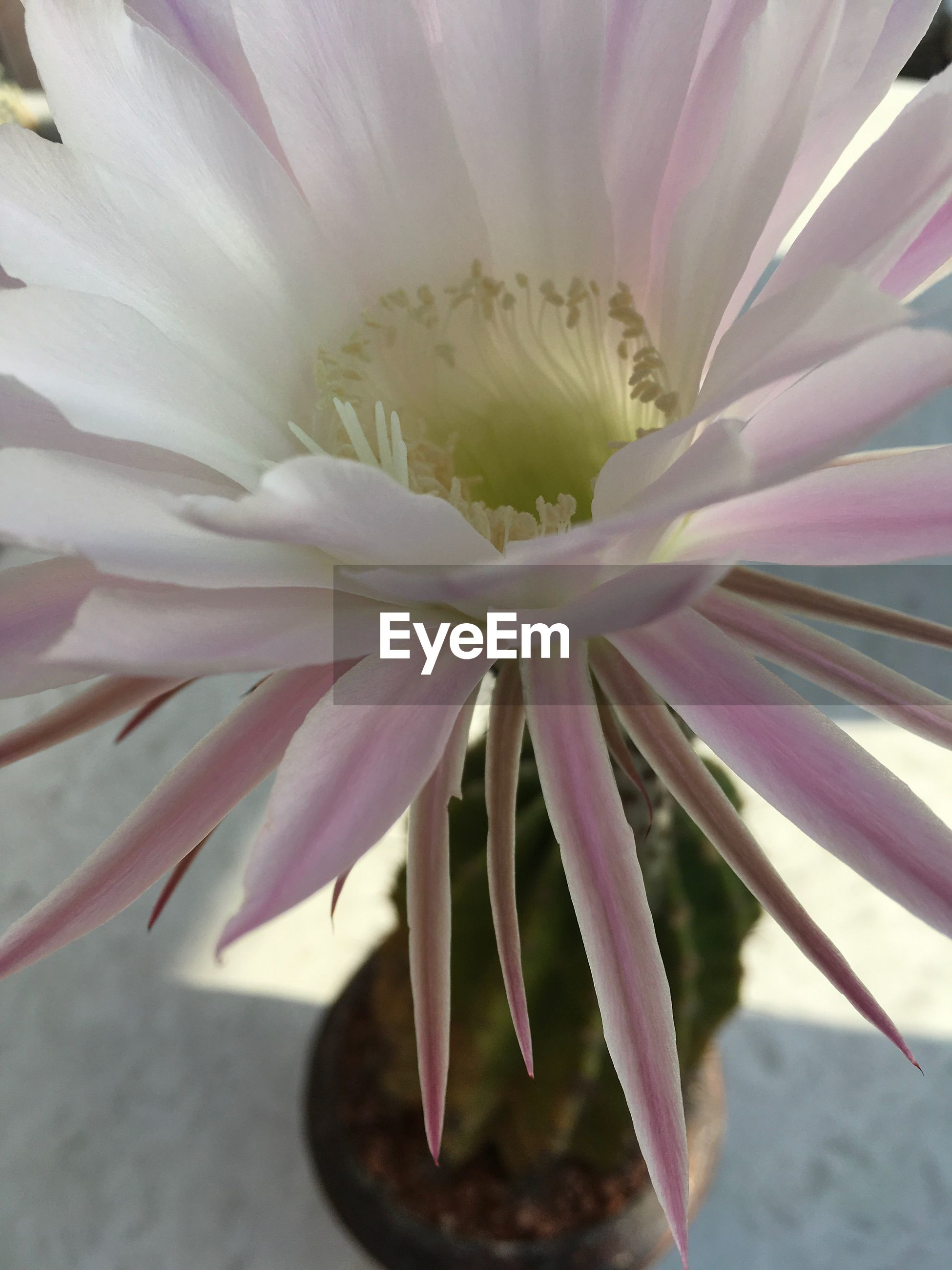 flower, petal, fragility, growth, beauty in nature, nature, freshness, close-up, plant, flower head, day, no people, outdoors, pink color, blooming