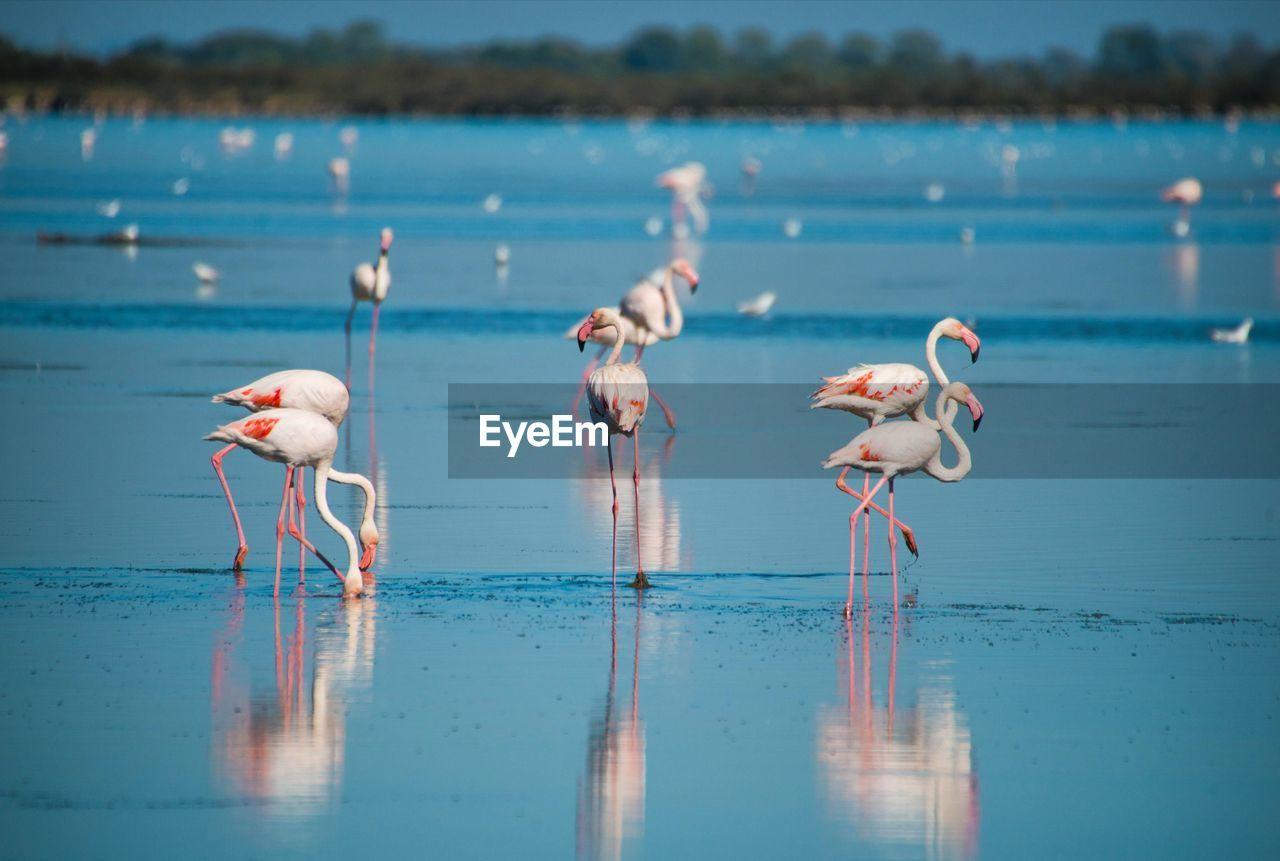 Close-Up Of Flamingos In Lake