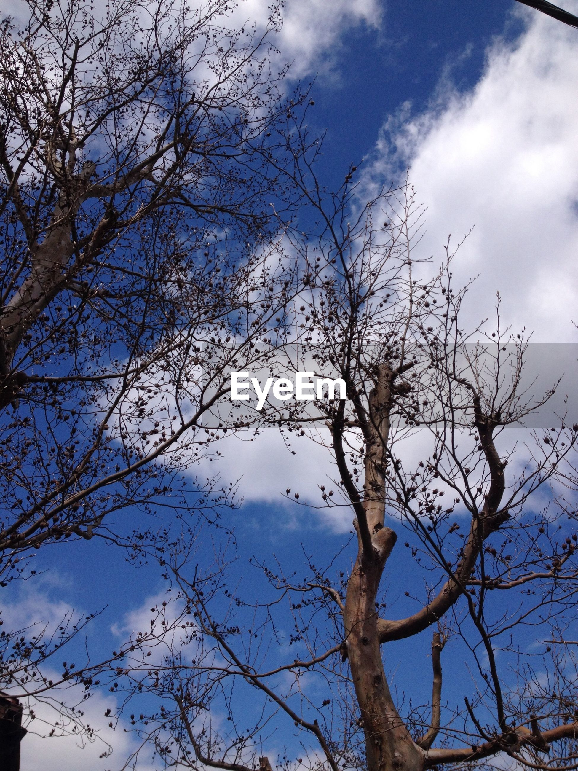 low angle view, tree, branch, bare tree, sky, cloud - sky, nature, tranquility, beauty in nature, blue, cloud, scenics, cloudy, outdoors, day, growth, no people, silhouette, tranquil scene, high section