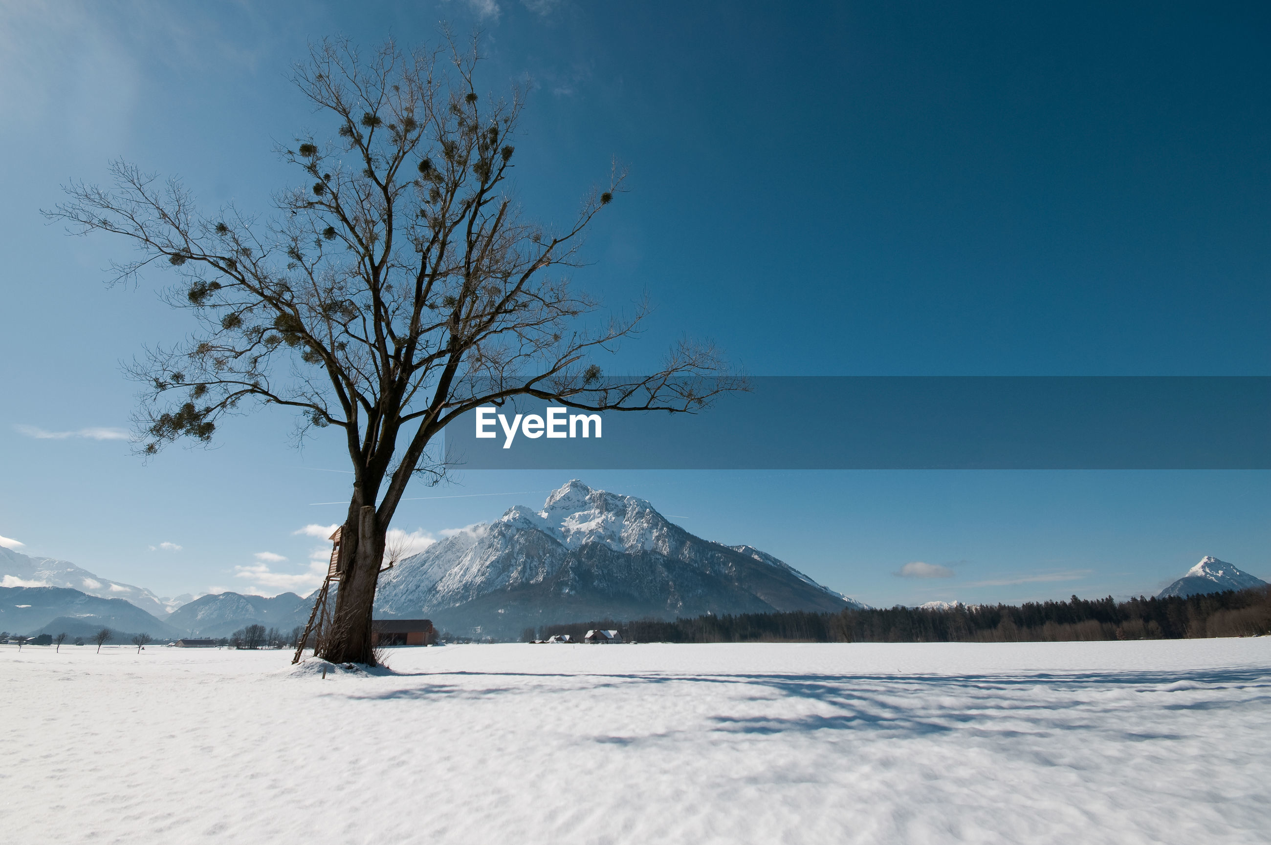 BARE TREES ON SNOWCAPPED MOUNTAIN AGAINST SKY
