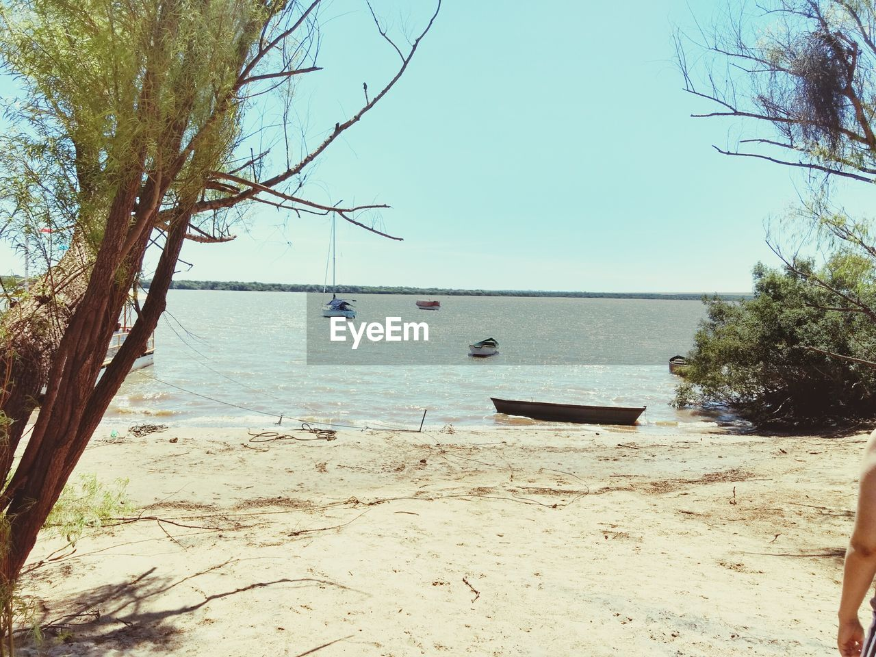 tree, water, nature, sea, beauty in nature, scenics, beach, sand, tranquility, day, clear sky, tranquil scene, outdoors, no people, horizon over water, sky, branch, bare tree, nautical vessel