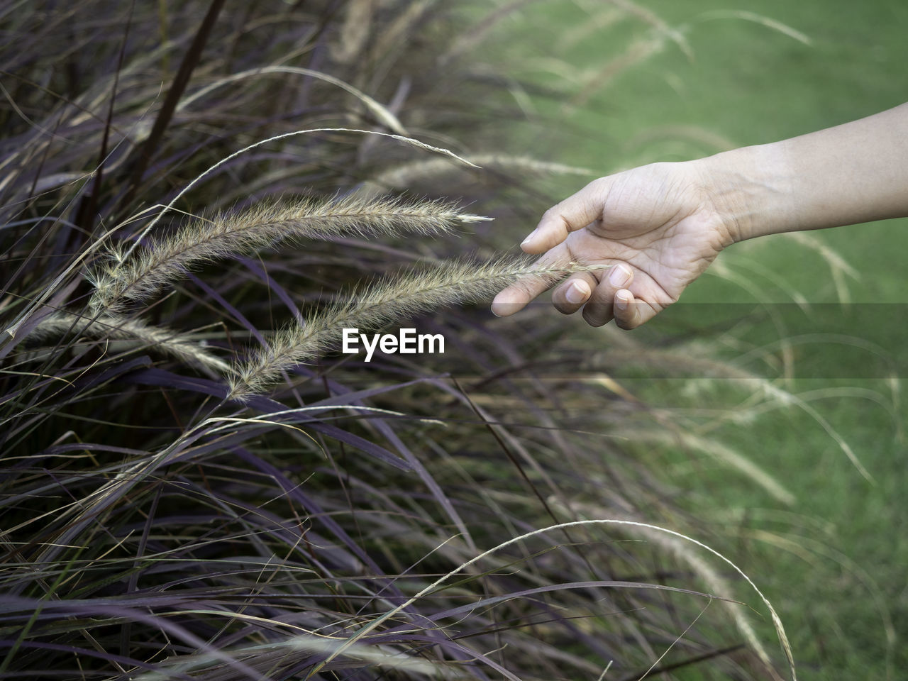 Close-up of hand touching plant on field