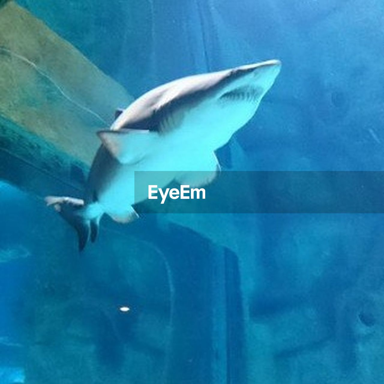 one animal, underwater, animal themes, animal wildlife, sea life, animals in the wild, full length, no people, sea, undersea, swimming, dolphin, day, animal fin, nature, water, outdoors, close-up, mammal