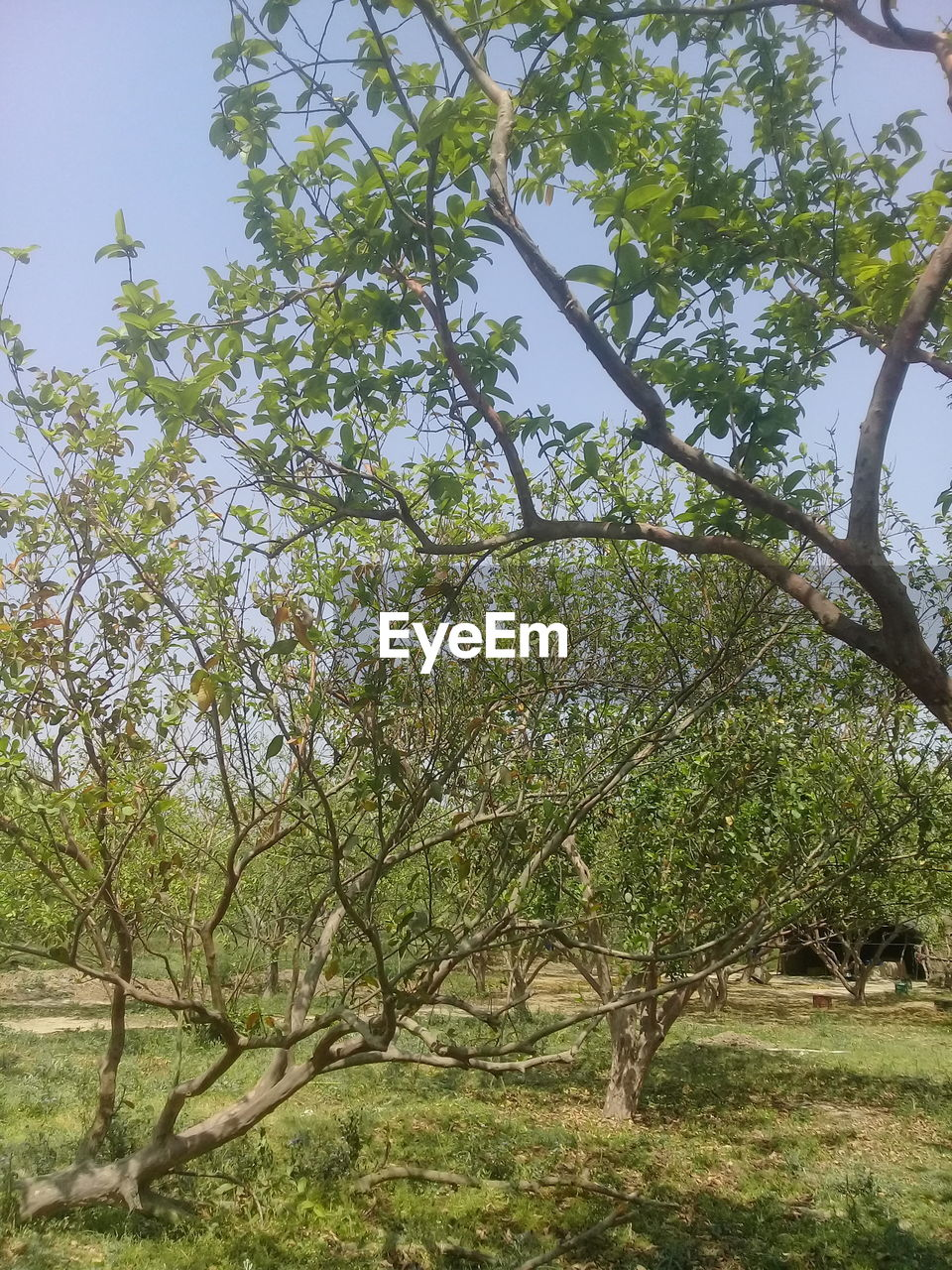 tree, growth, nature, branch, no people, beauty in nature, tranquility, day, outdoors, sky