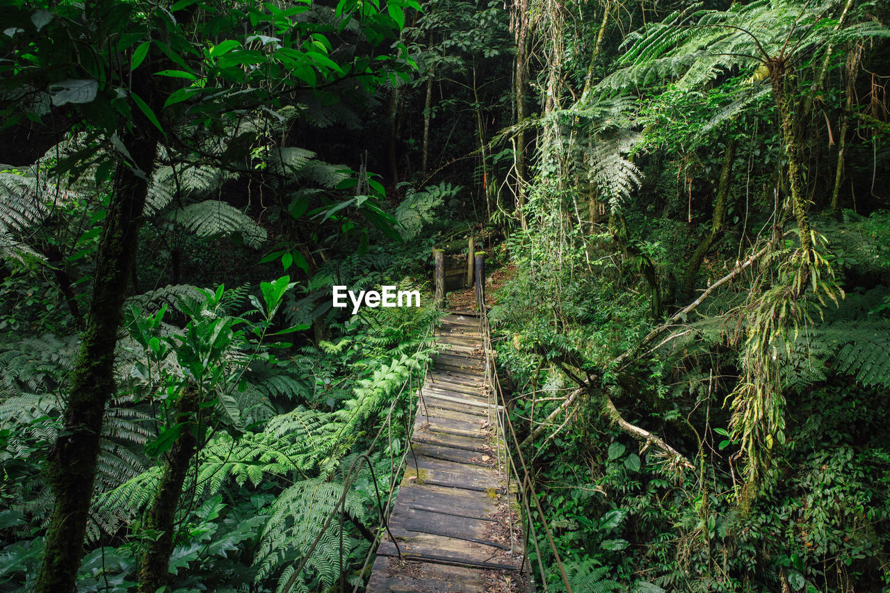 WALKWAY AMIDST PLANTS IN FOREST