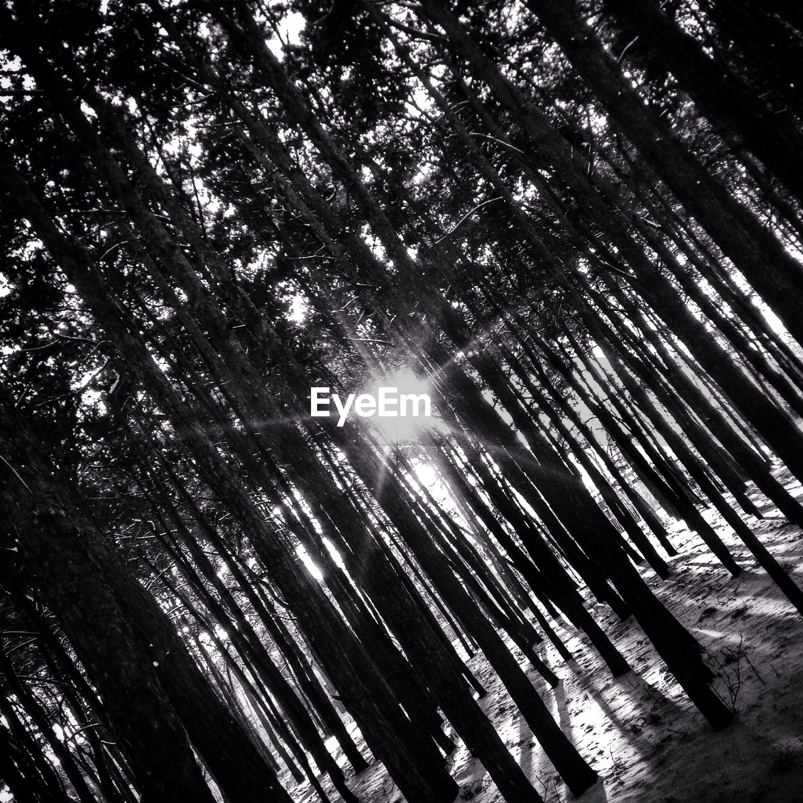 Tilt image of forest against bright sun