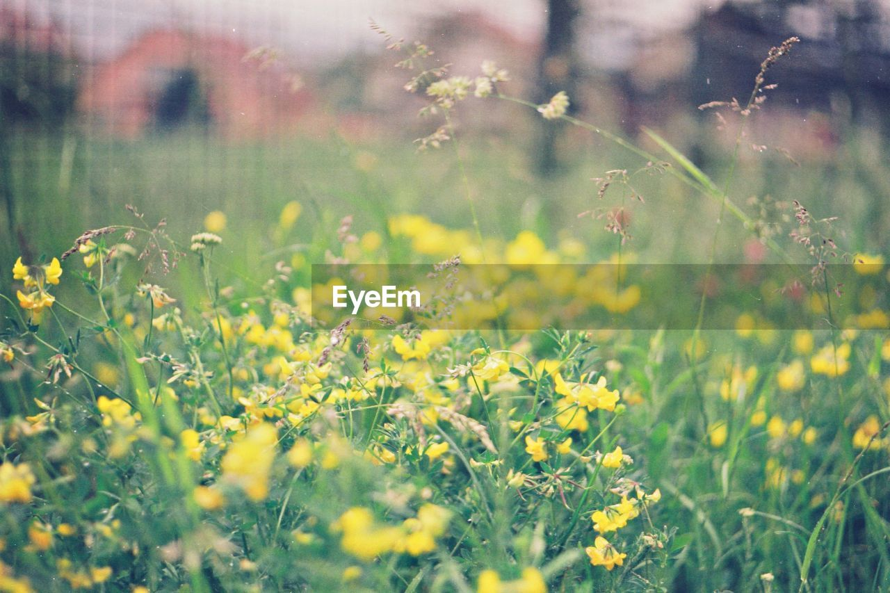 YELLOW FLOWERING PLANTS ON LAND