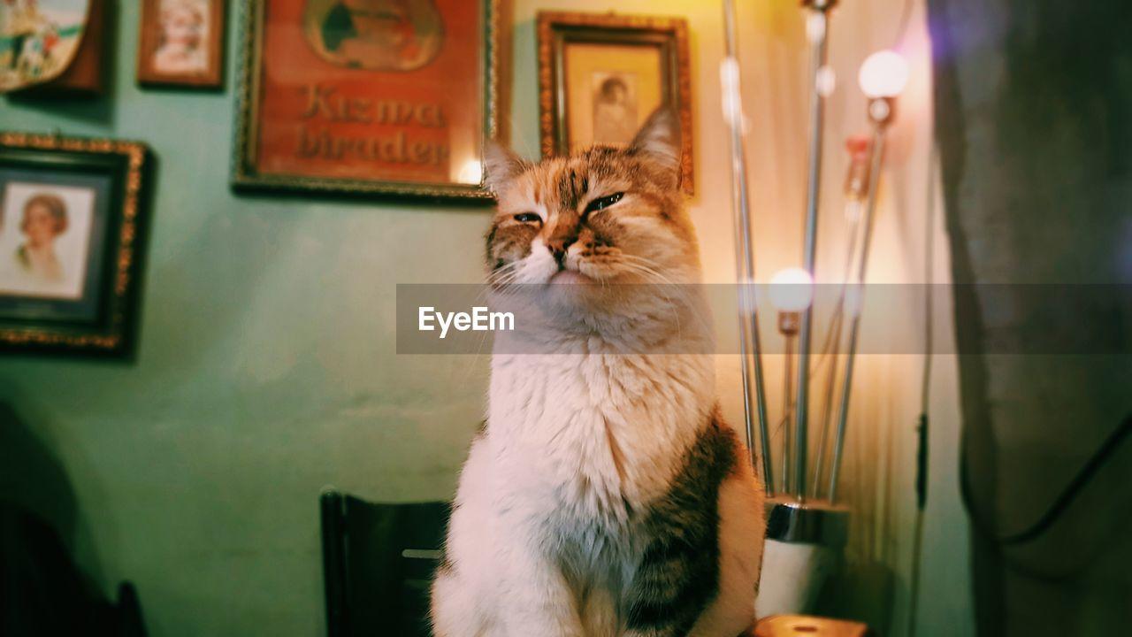 domestic cat, mammal, animal themes, domestic animals, one animal, pets, feline, indoors, no people, illuminated, close-up, day