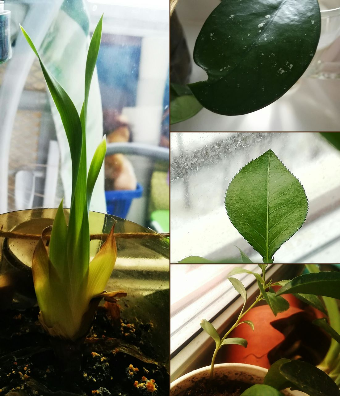 leaf, collage, growth, plant, close-up, no people, green color, freshness, beauty in nature, nature, indoors, day, water, fragility, flower