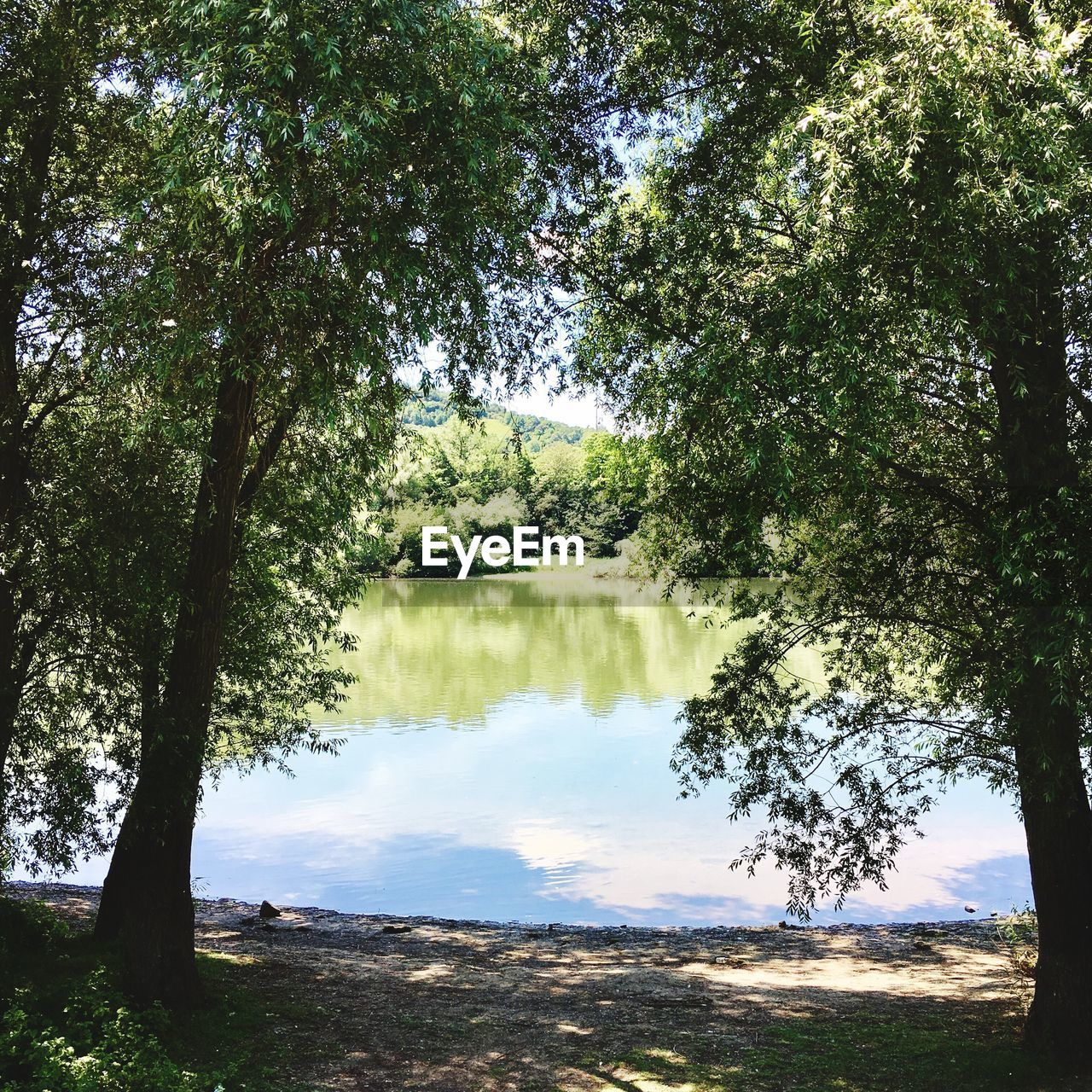 tree, nature, reflection, water, no people, tranquil scene, outdoors, day, growth, tranquility, beauty in nature, forest, scenics, lake, branch, sky, grass