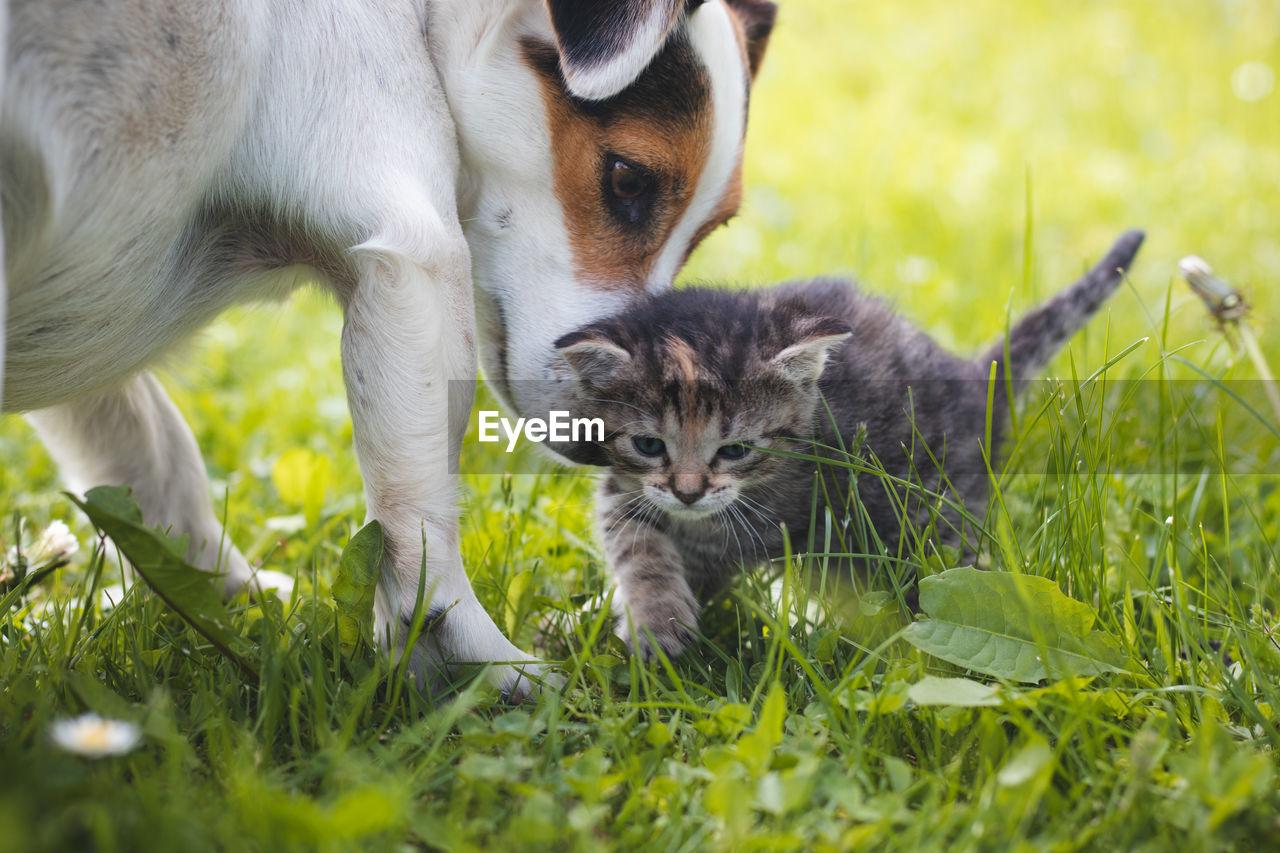CATS RELAXING IN FIELD
