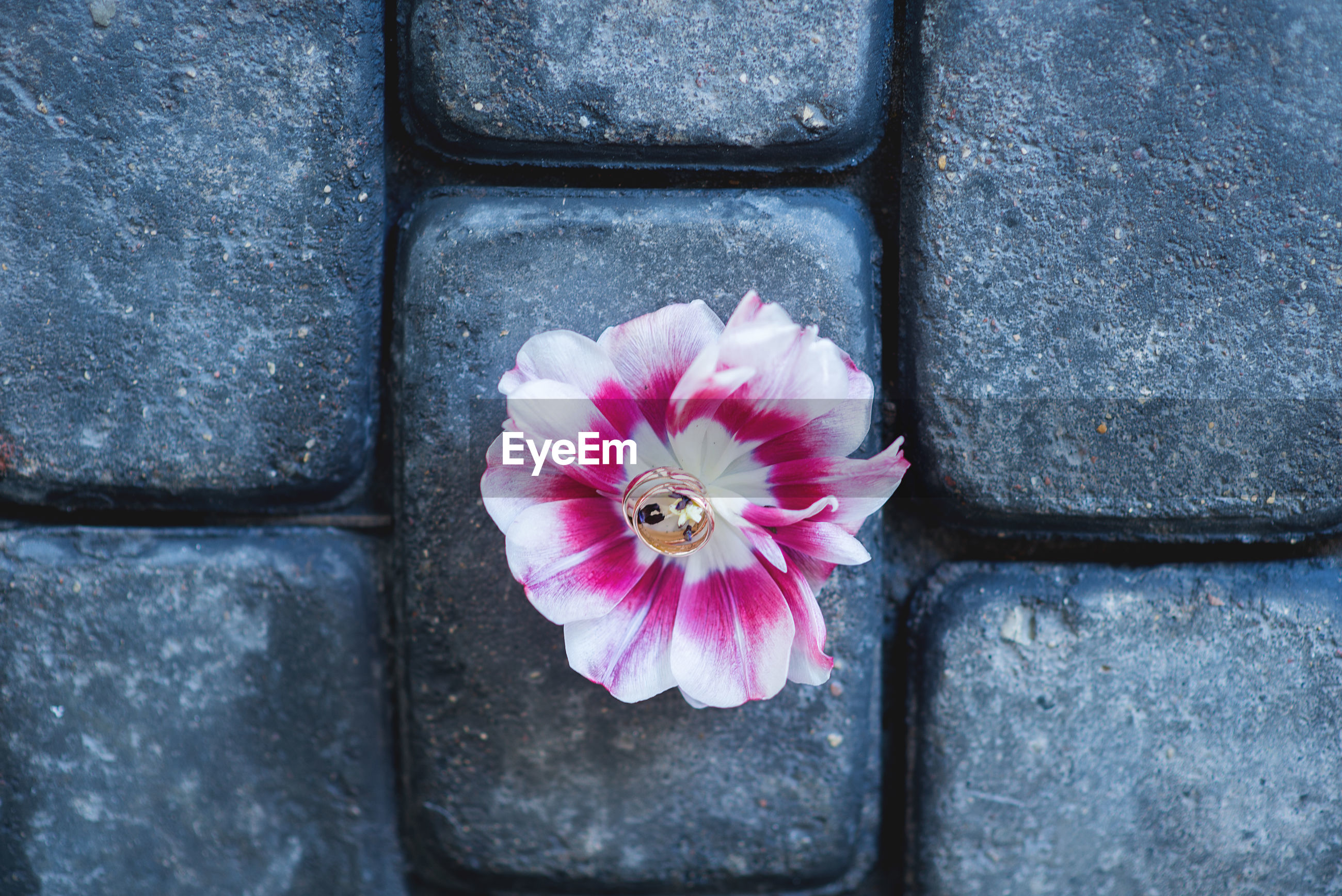 Directly above shot of wedding rings with flower on cobblestone