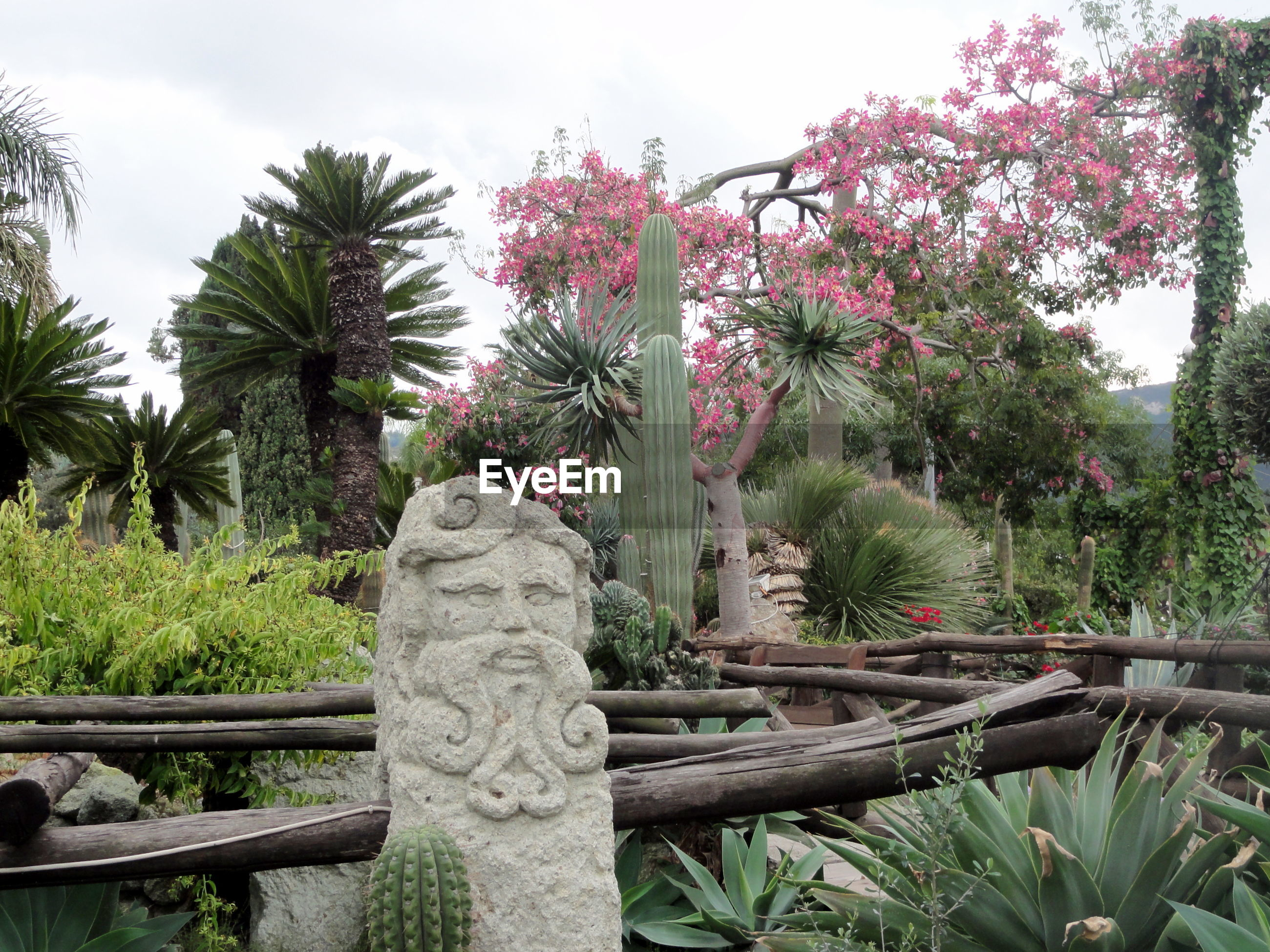 Close-up of cactus garden