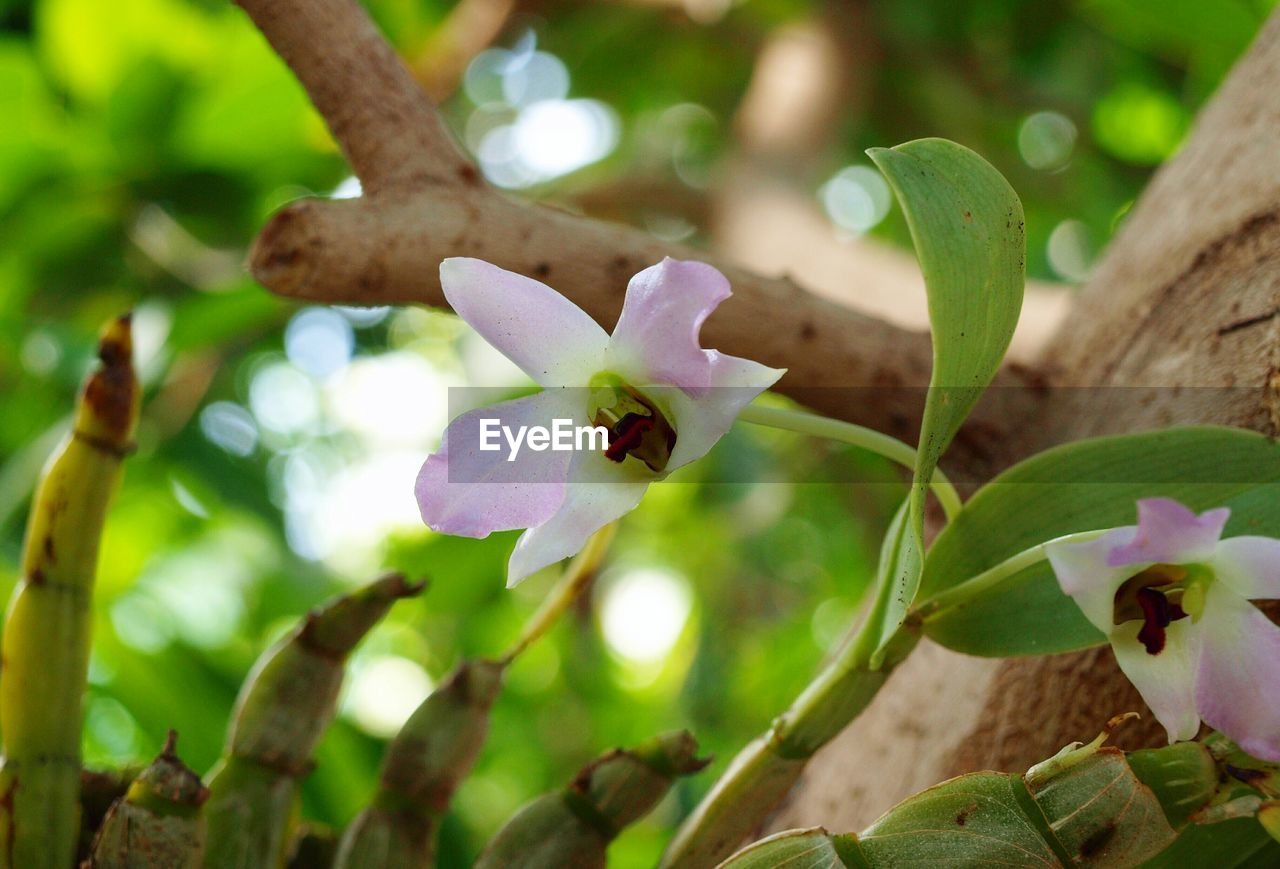 flower, petal, growth, nature, fragility, beauty in nature, freshness, flower head, day, no people, plant, focus on foreground, animal themes, outdoors, leaf, one animal, animals in the wild, close-up, blooming, periwinkle