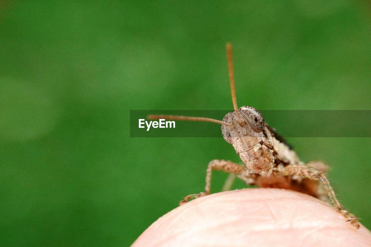 Close-Up Of Grasshopper On Finger At Park