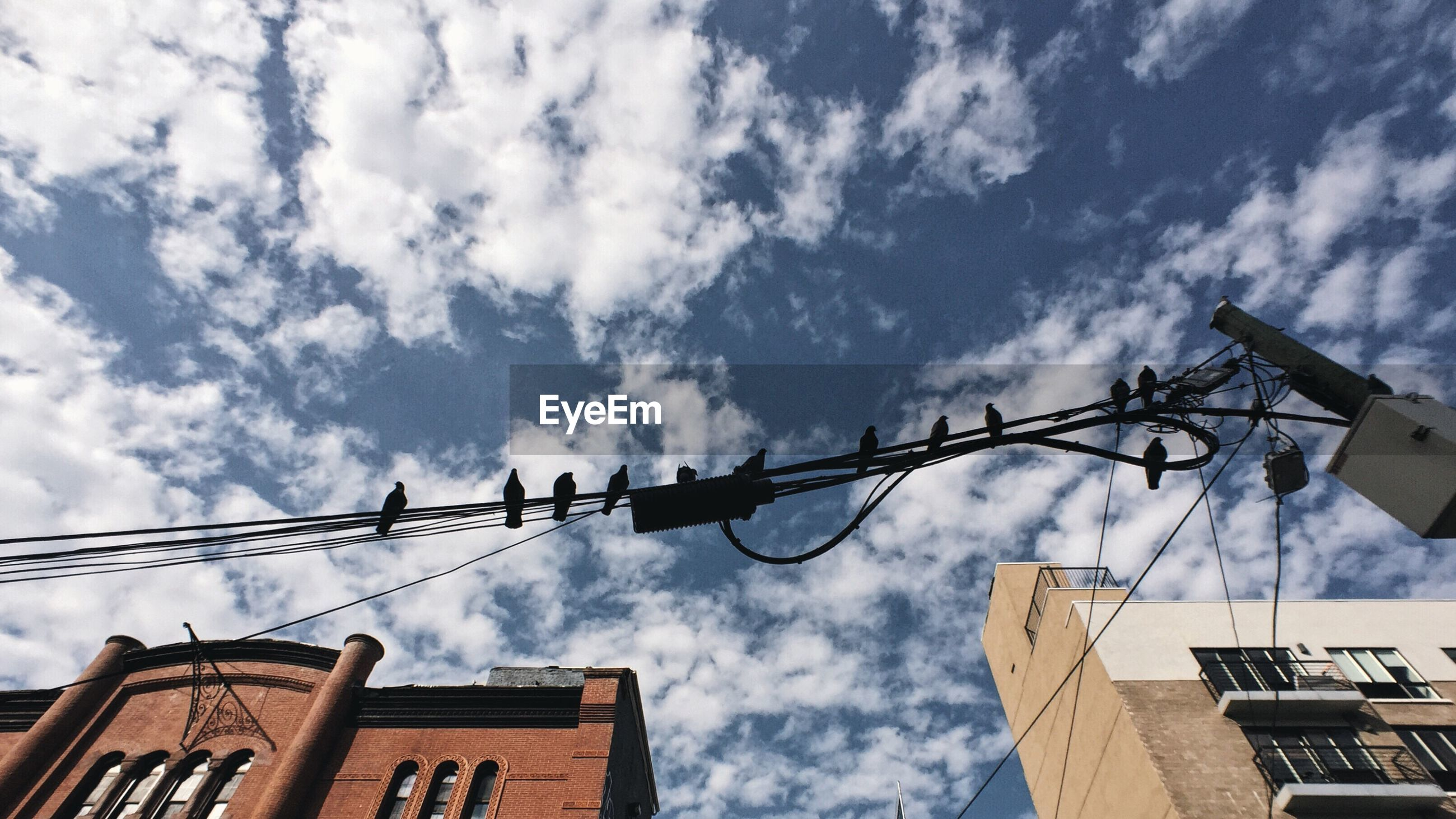 Low angle view of birds on power line against cloudy sky