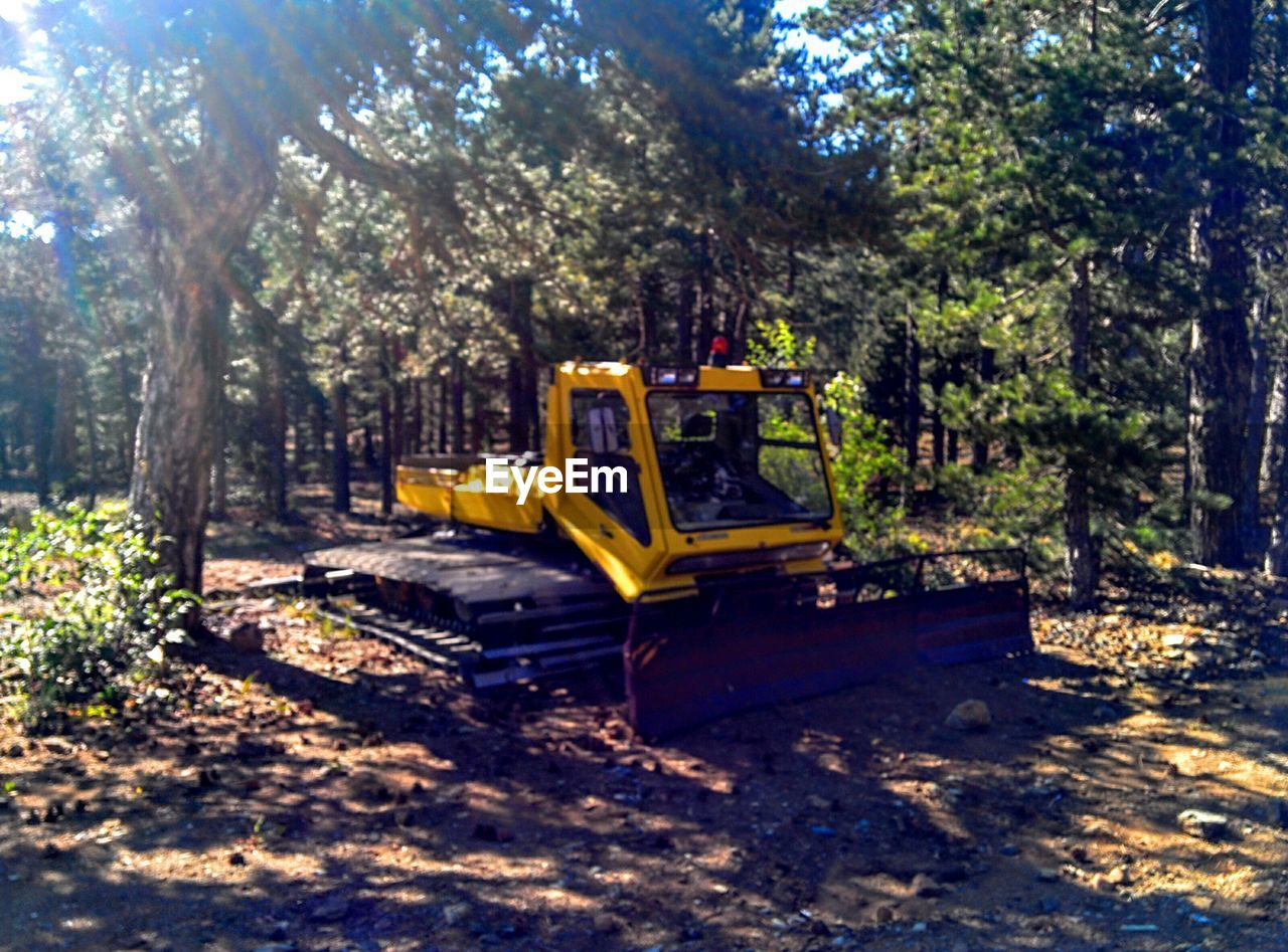 tree, construction machinery, sunlight, growth, day, outdoors, nature, no people