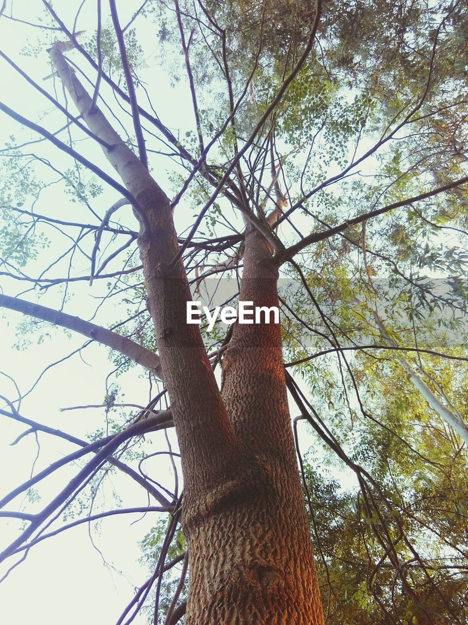 tree, low angle view, tree trunk, branch, nature, day, growth, forest, no people, outdoors, beauty in nature, sky