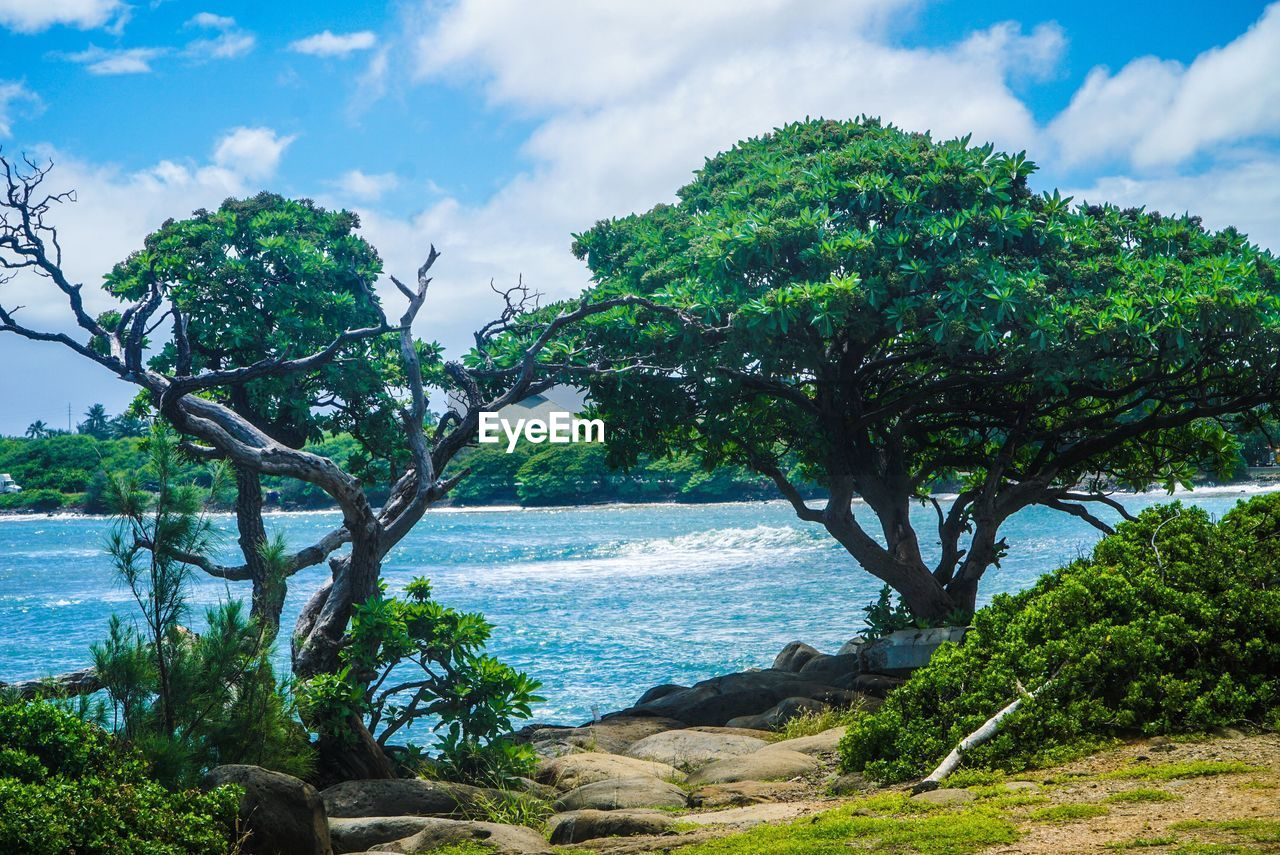 water, tree, sky, plant, cloud - sky, sea, beauty in nature, tranquility, land, nature, scenics - nature, tranquil scene, beach, growth, day, no people, rock, non-urban scene, horizon, outdoors