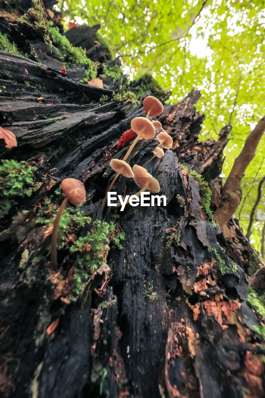 tree, plant, nature, trunk, tree trunk, day, growth, forest, wood - material, mushroom, land, fungus, outdoors, selective focus, close-up, no people, vegetable, toadstool, focus on foreground, wood
